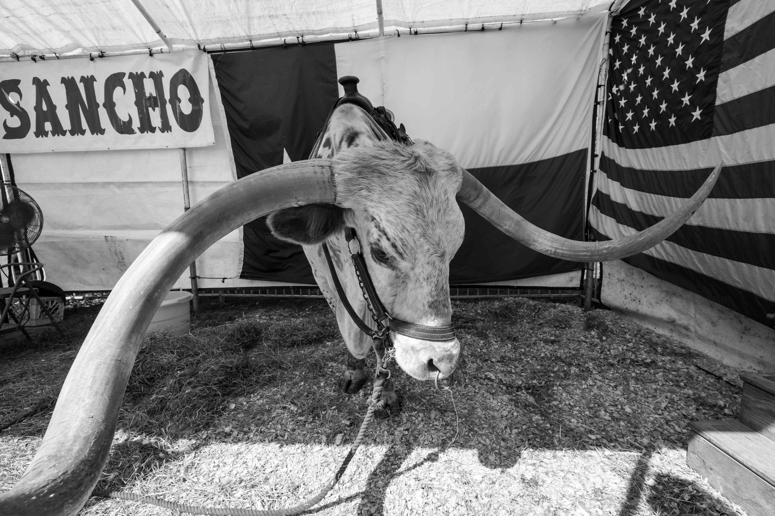 Wayne county fair