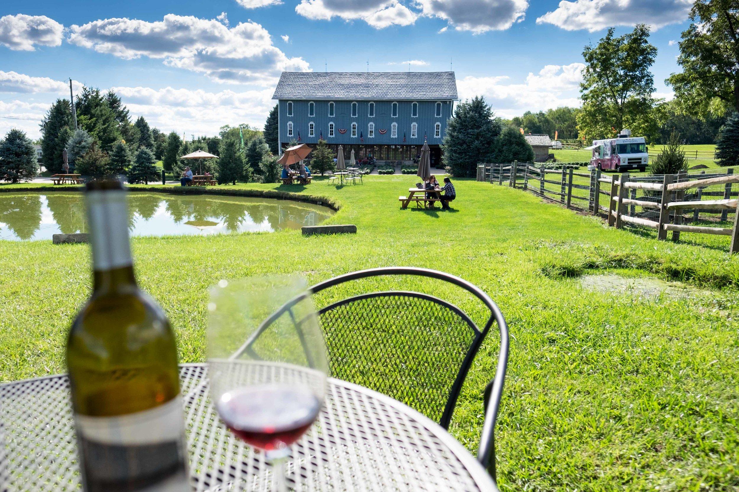 Wine and Summer Sun