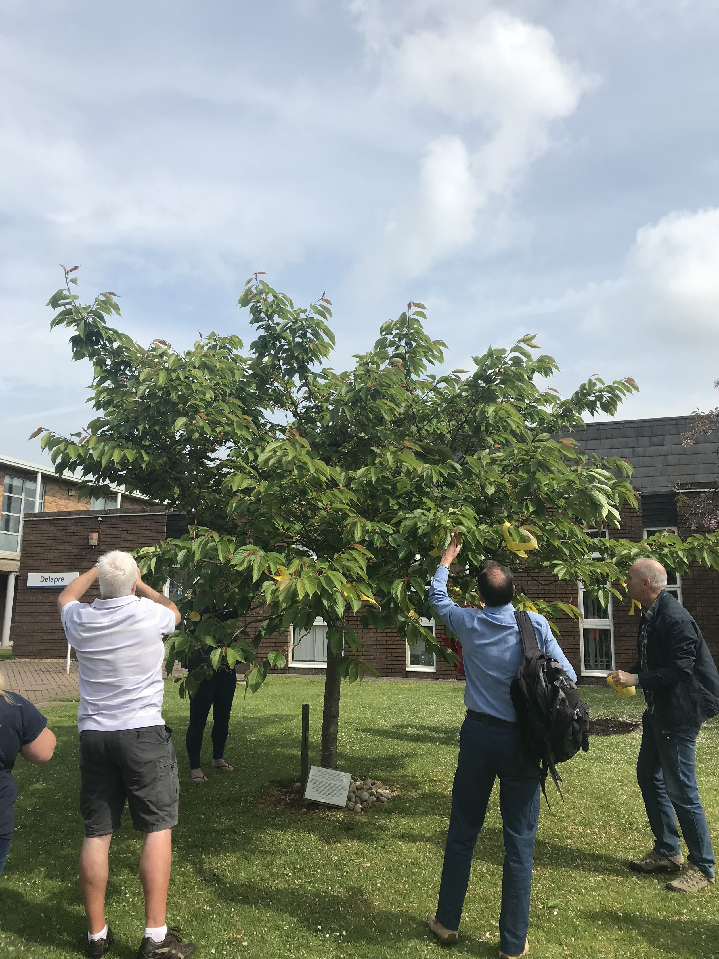 The Stephen Lawrence Memorial tree