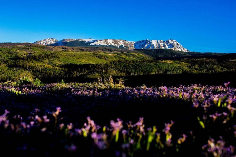 Field-of-Flowers-Near-Gore-Range-Mountains-in-Colorado.jpg