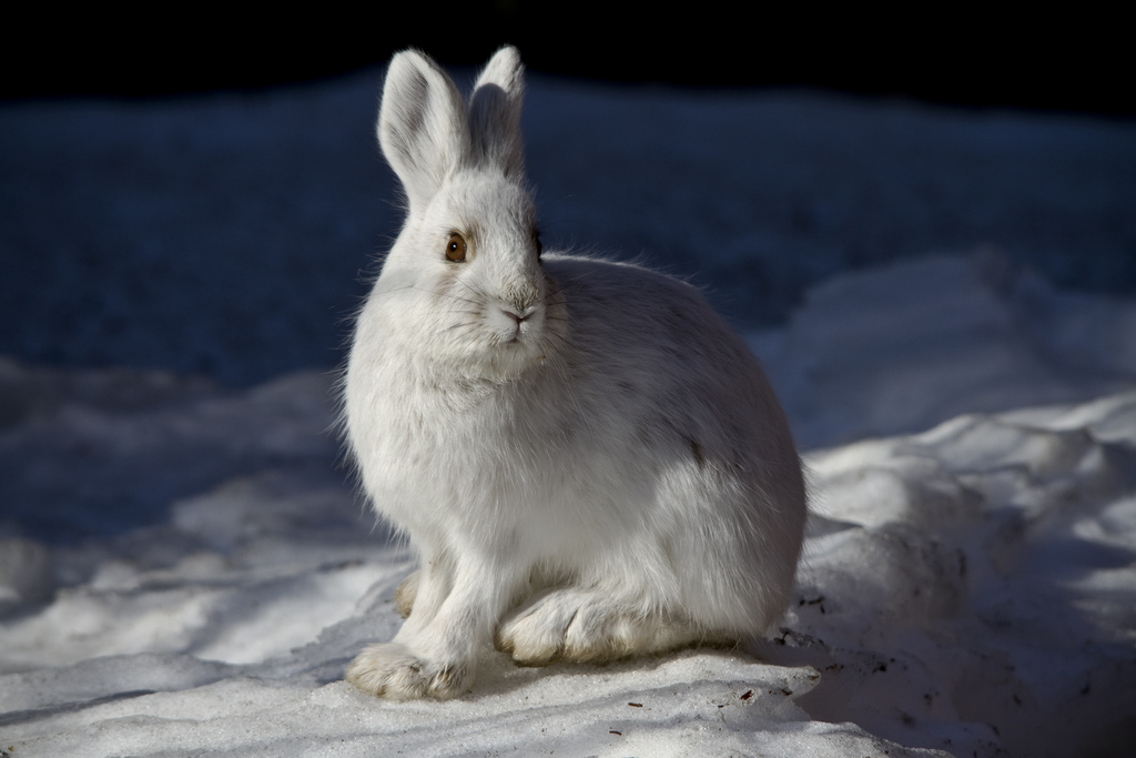 Photo:  Denali National Park and Preserve