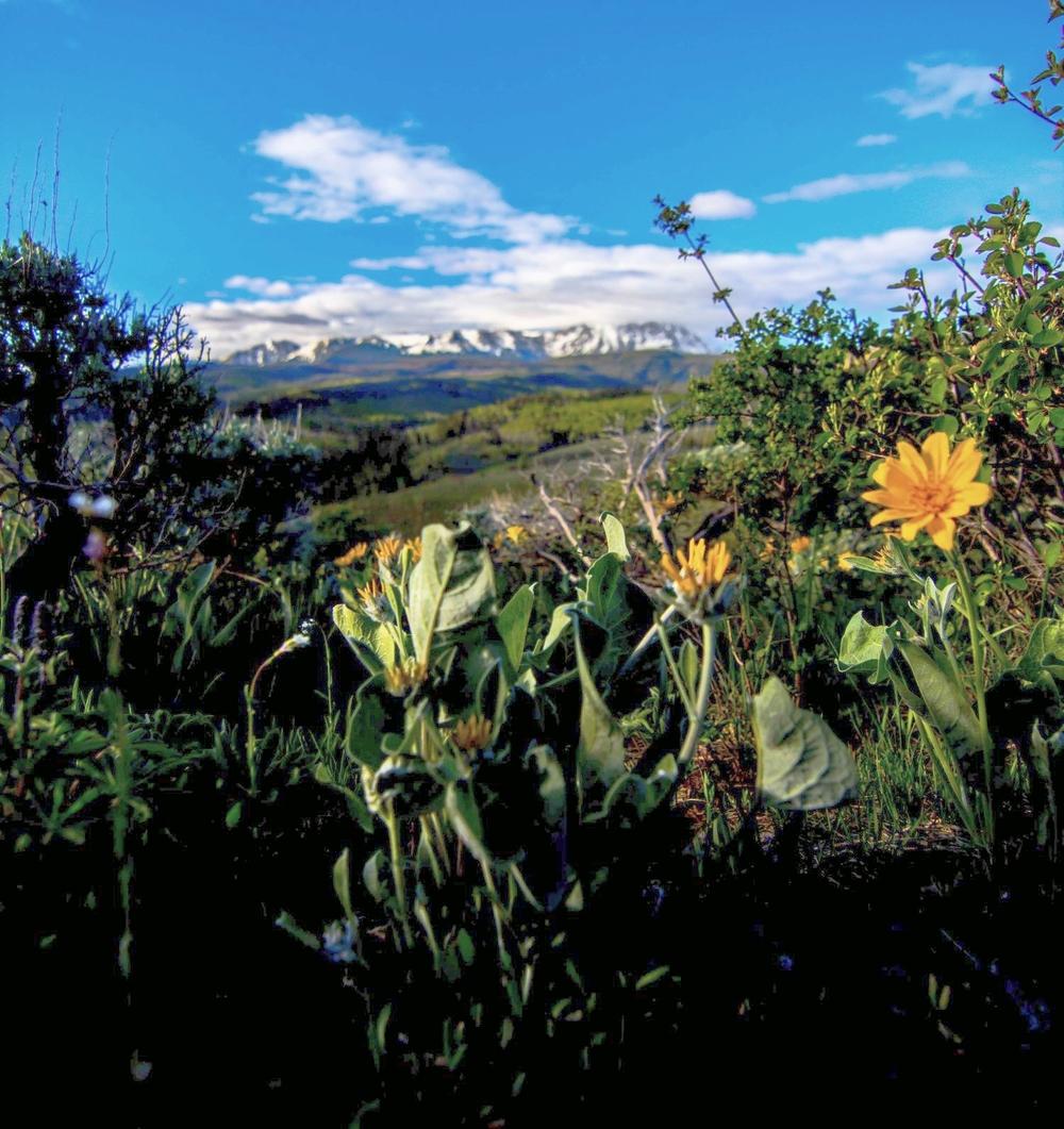 lush-mountain-meadow-at-shadow-creek-ranch.jpg