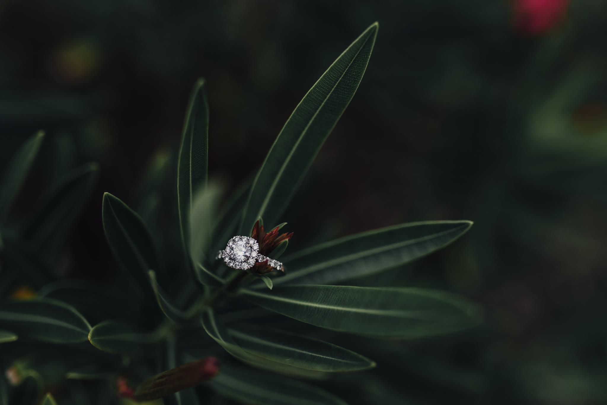 engagement (18 of 35).jpg