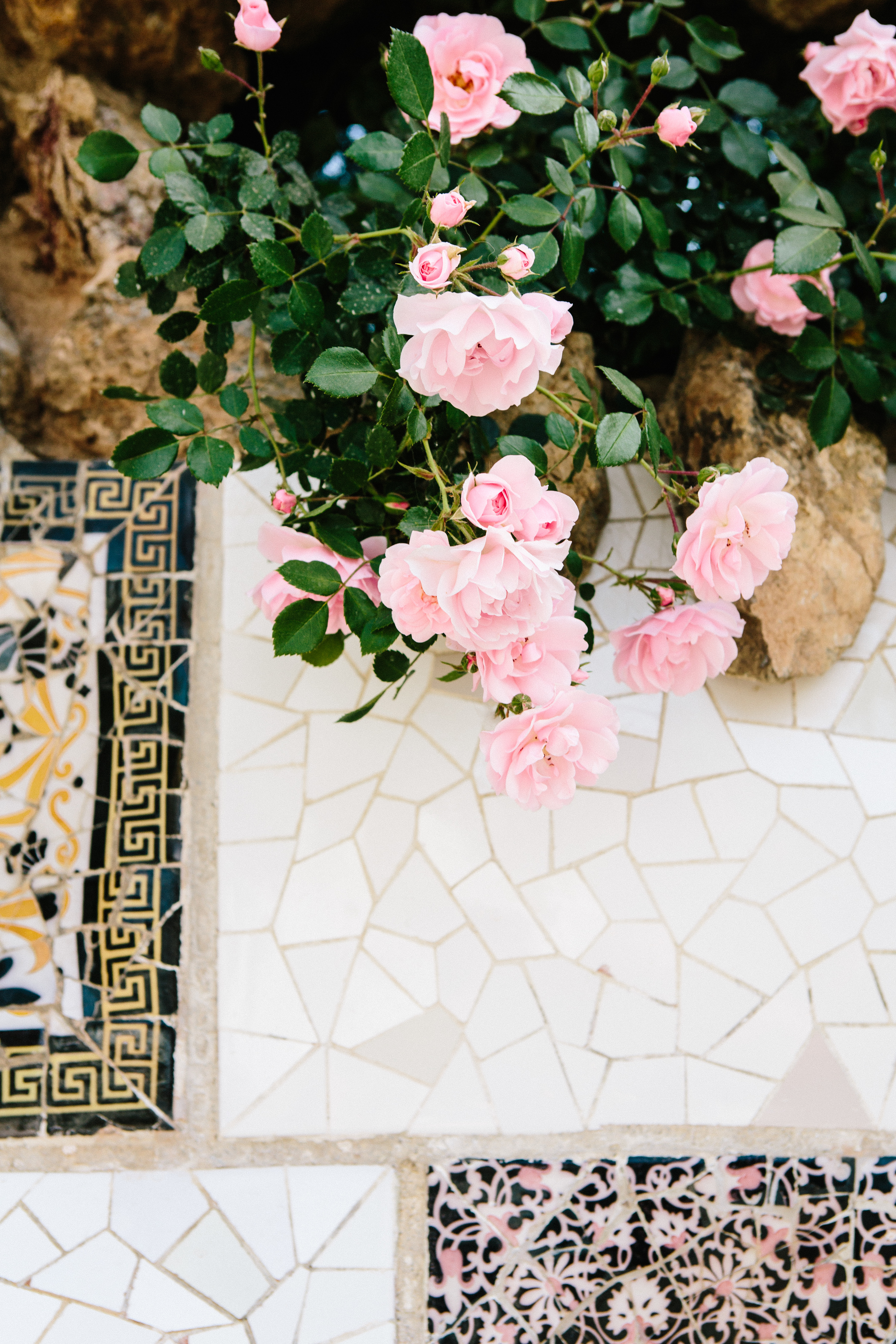 parc guell pink roses-1.jpg