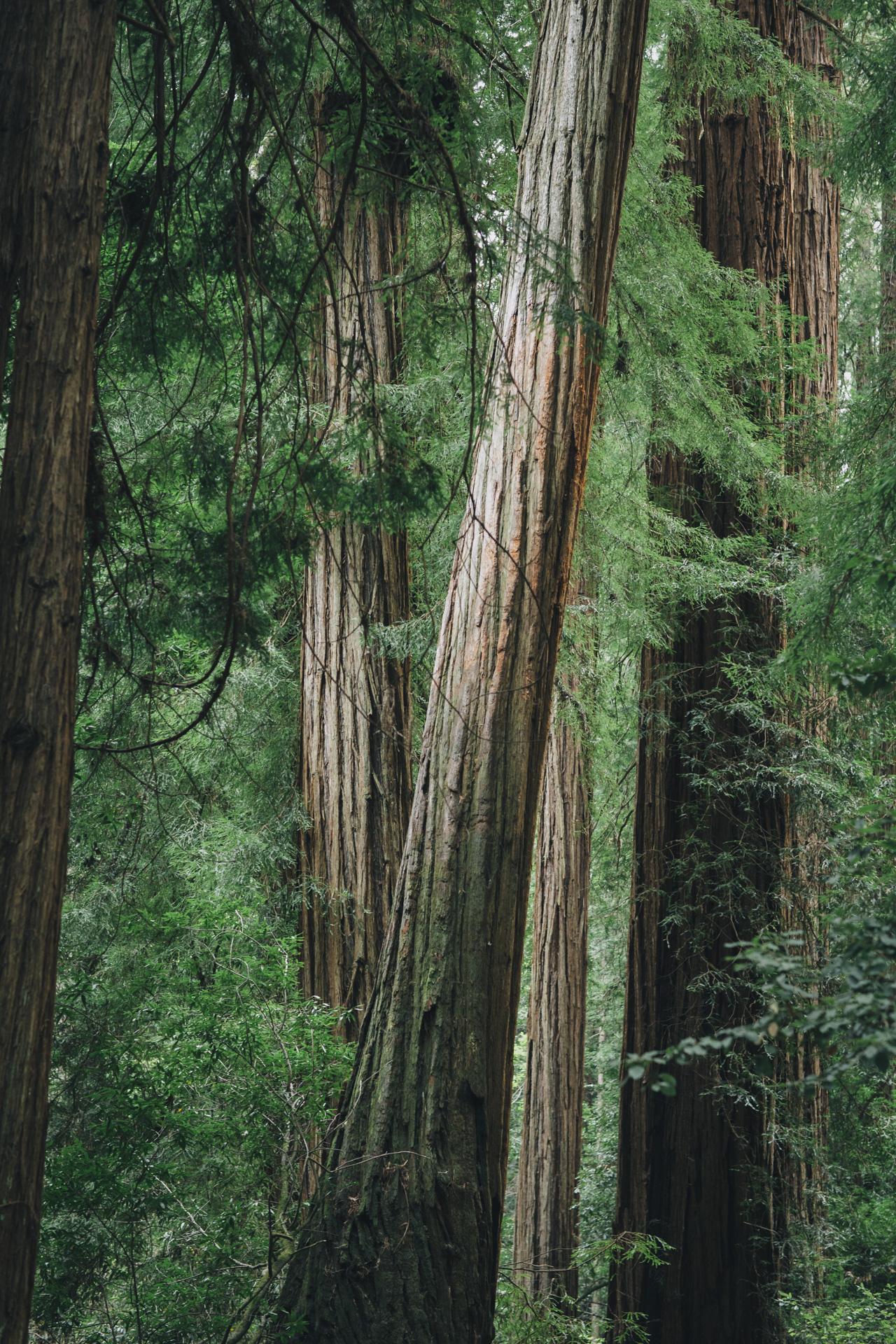 L+S_muir woods_low res-003.jpg