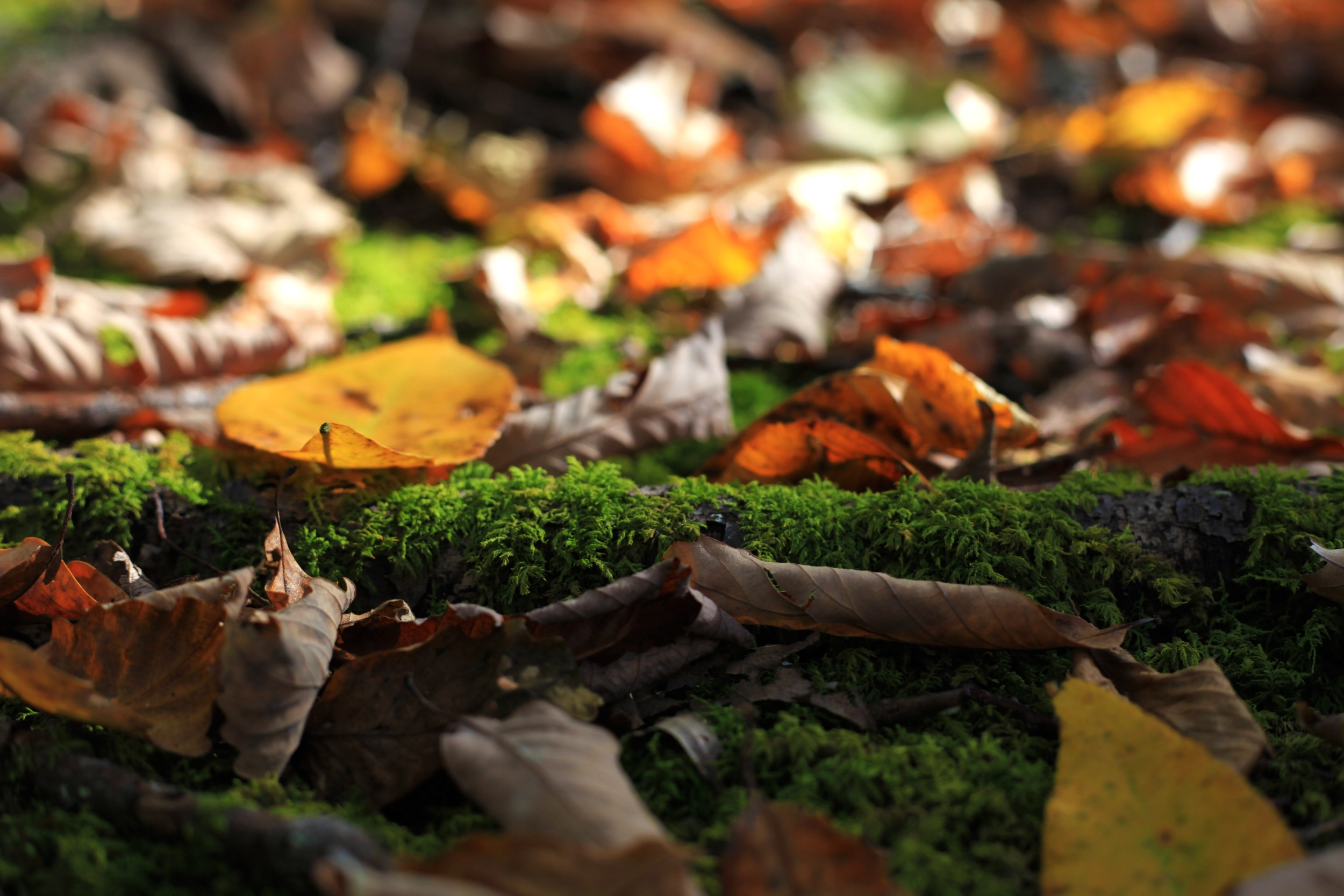 Leaf litter in Shenandoah National Park. Photo by Heather Rosenfeldt.