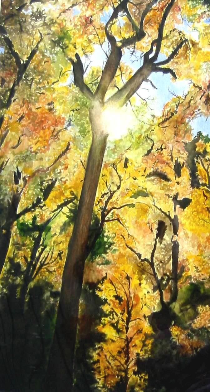 treelight1.jpg