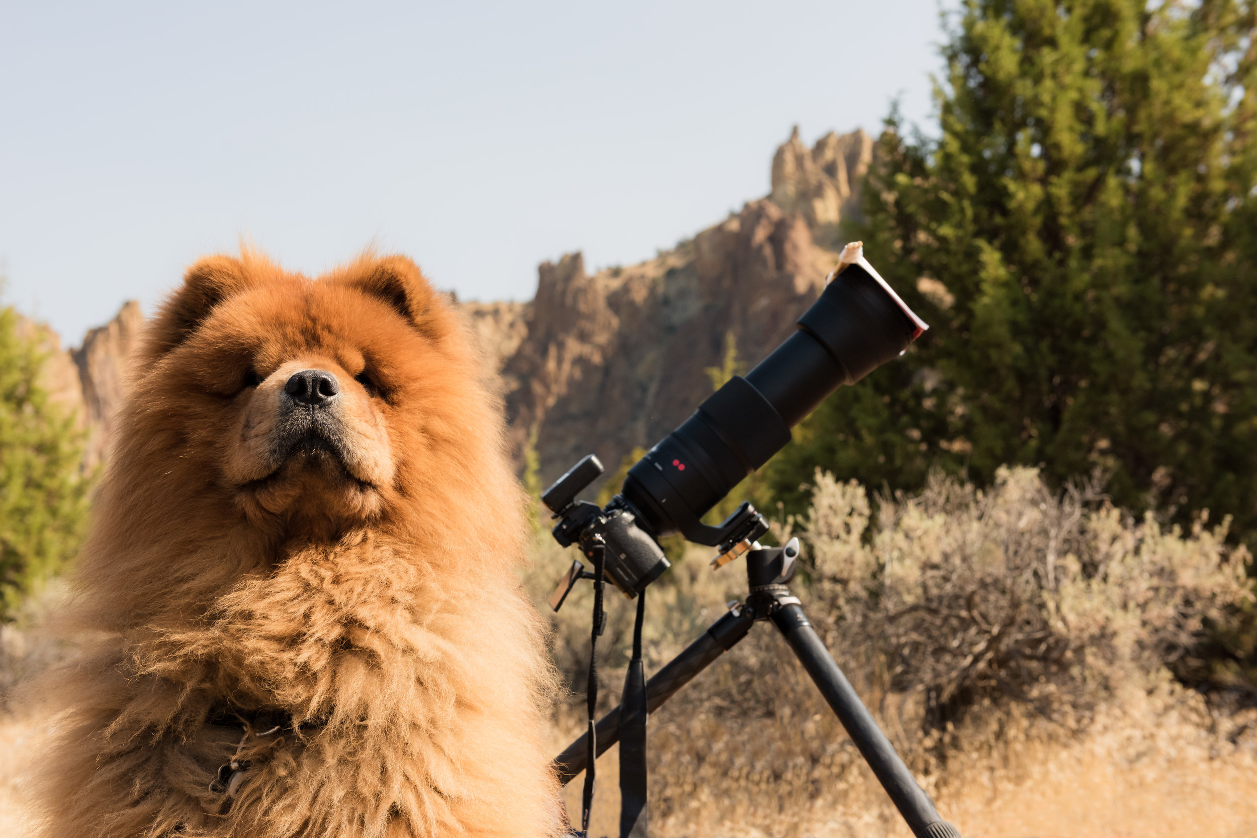 """Tracking the sun at 600mm sure is ruff."""