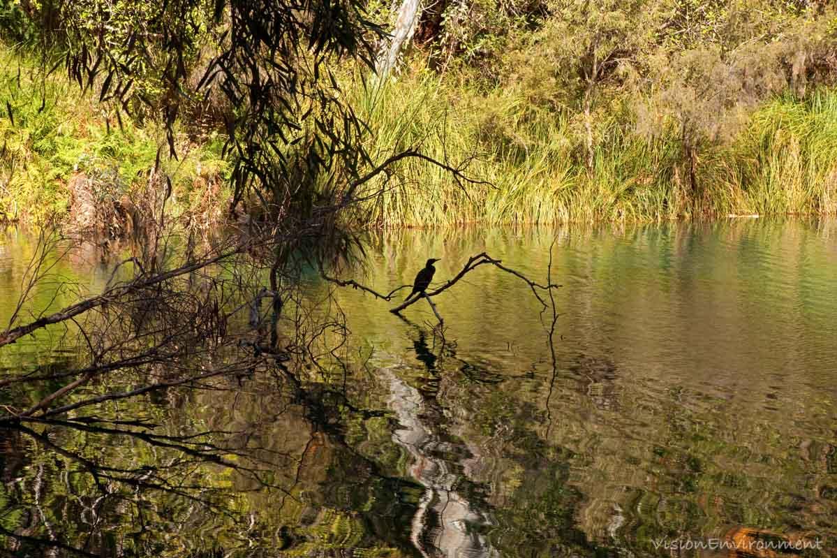 Bird Fern Pool.jpg