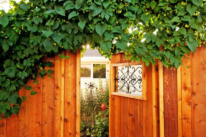 Fences_Vines