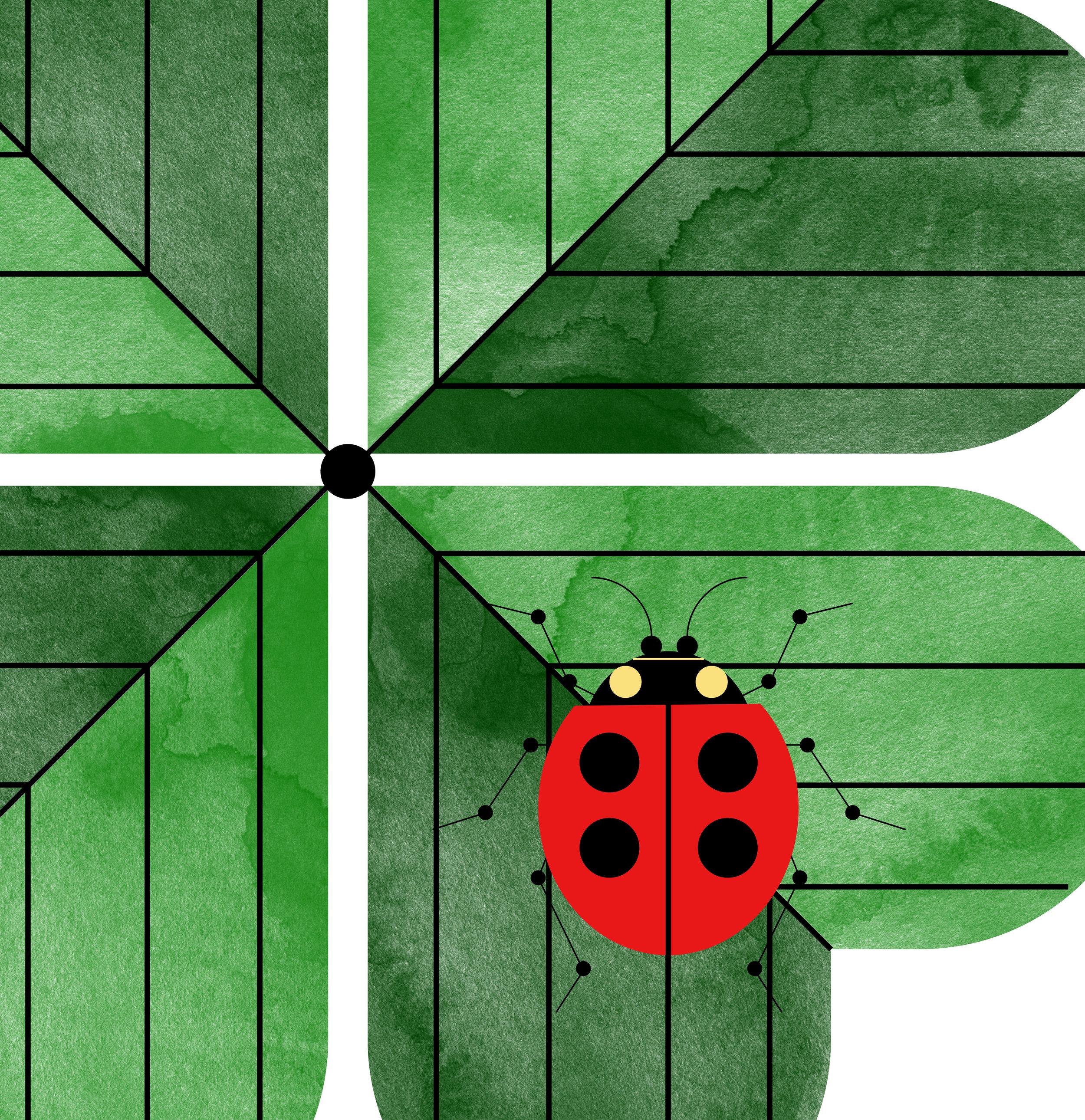 Lady Bug on Four Leaf3 (Close Up).jpg