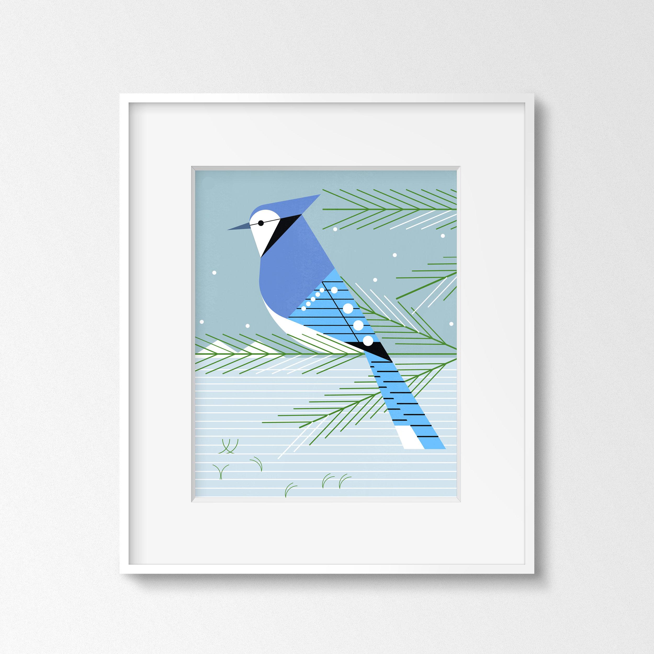 Bluejay (Thin White Frame).jpg