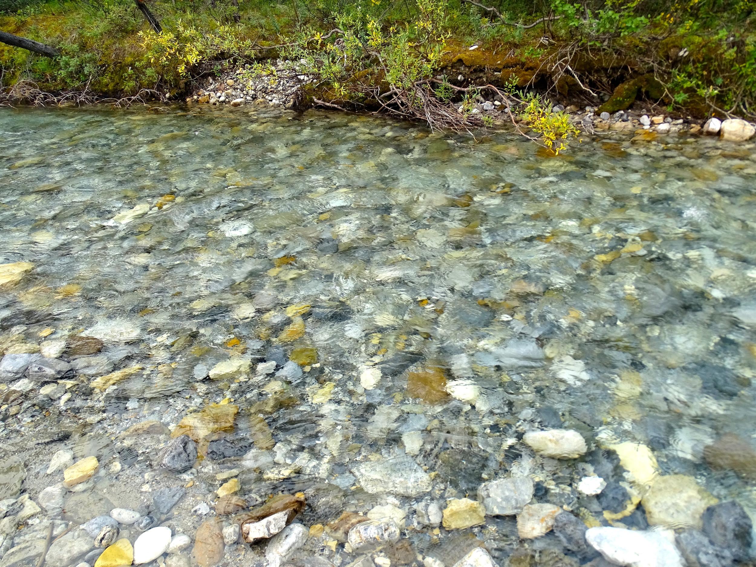 Unbelievably Clear Water