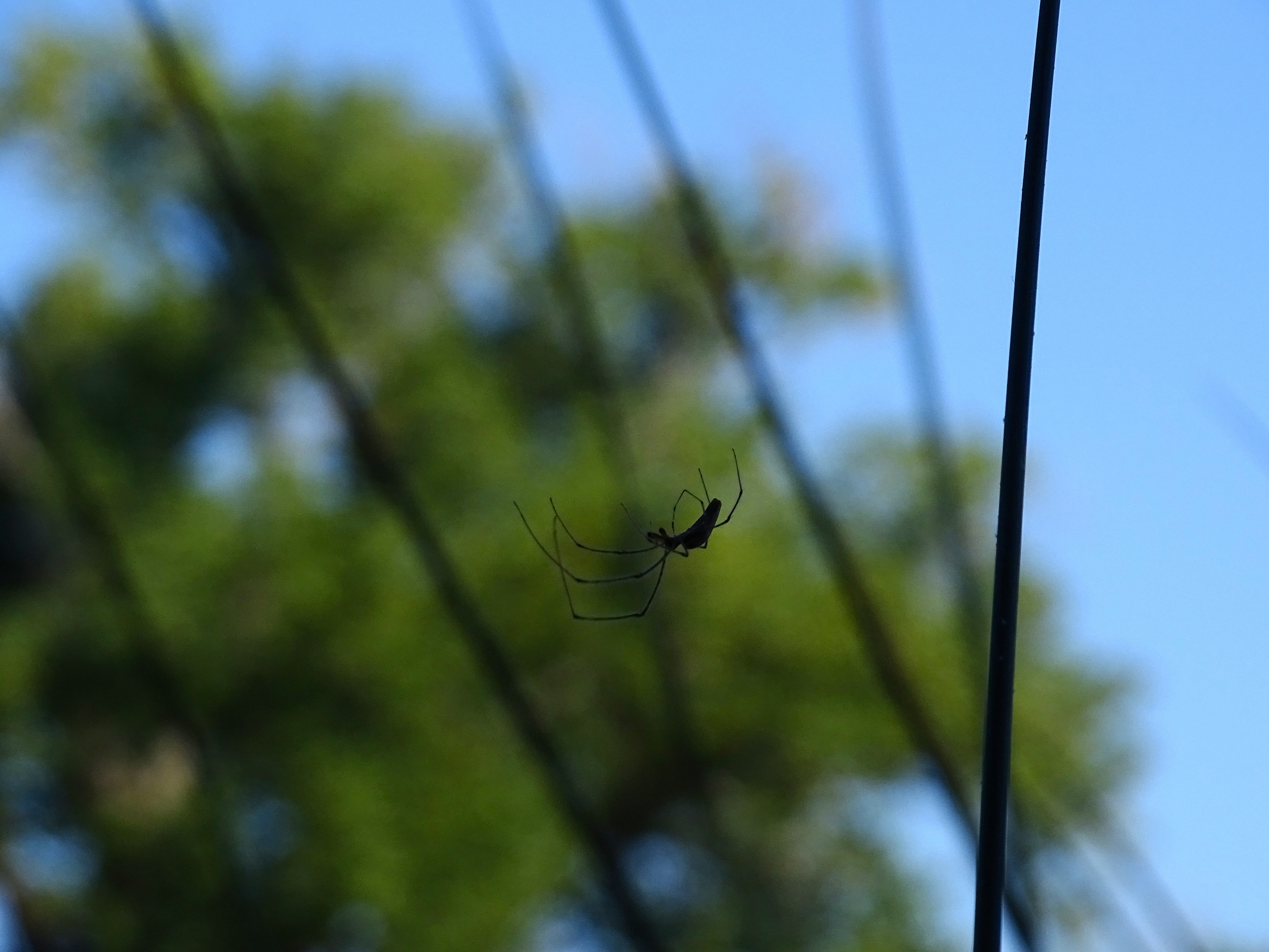We watched this spider for a while.