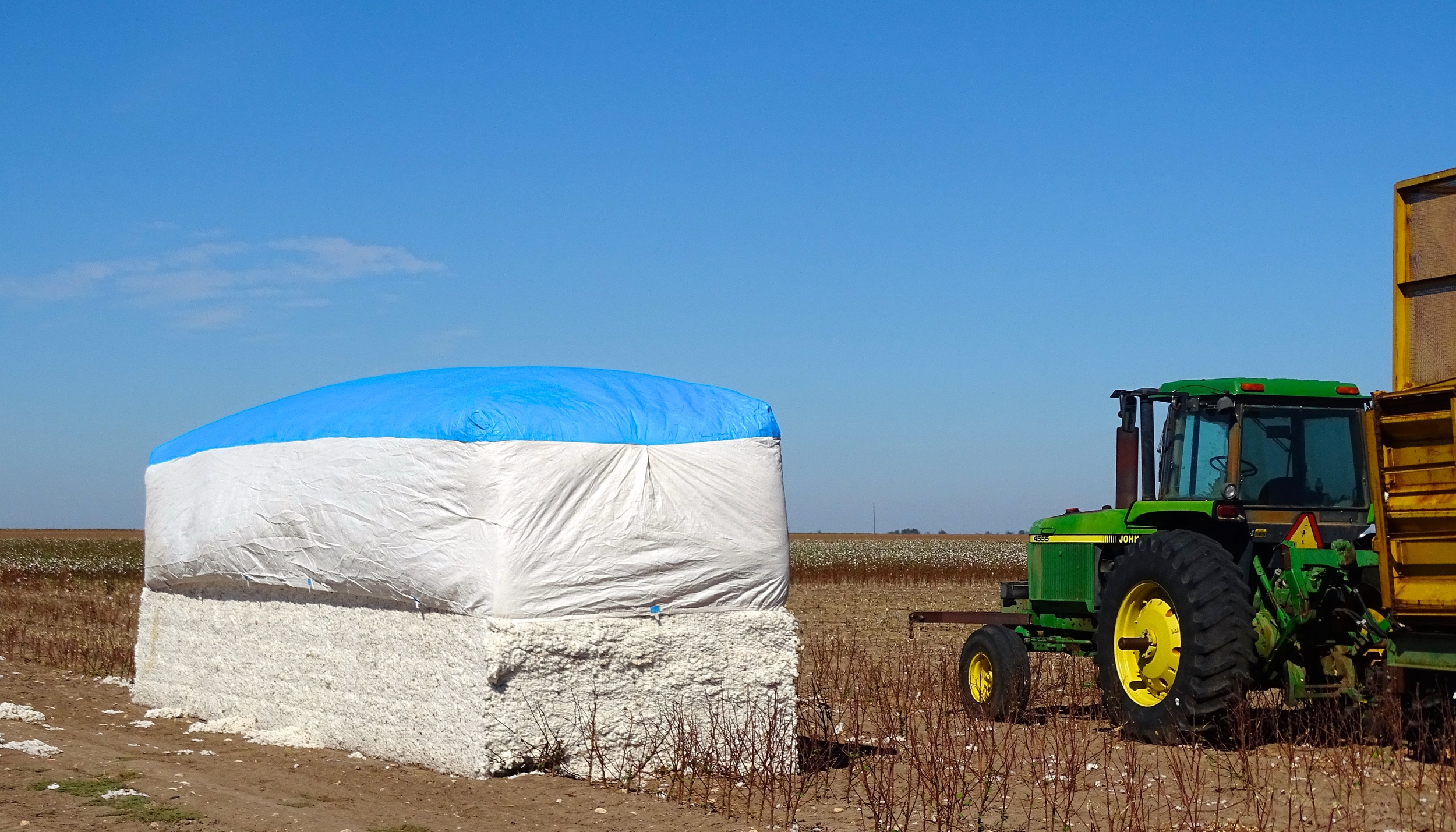 Harvested Cotton!