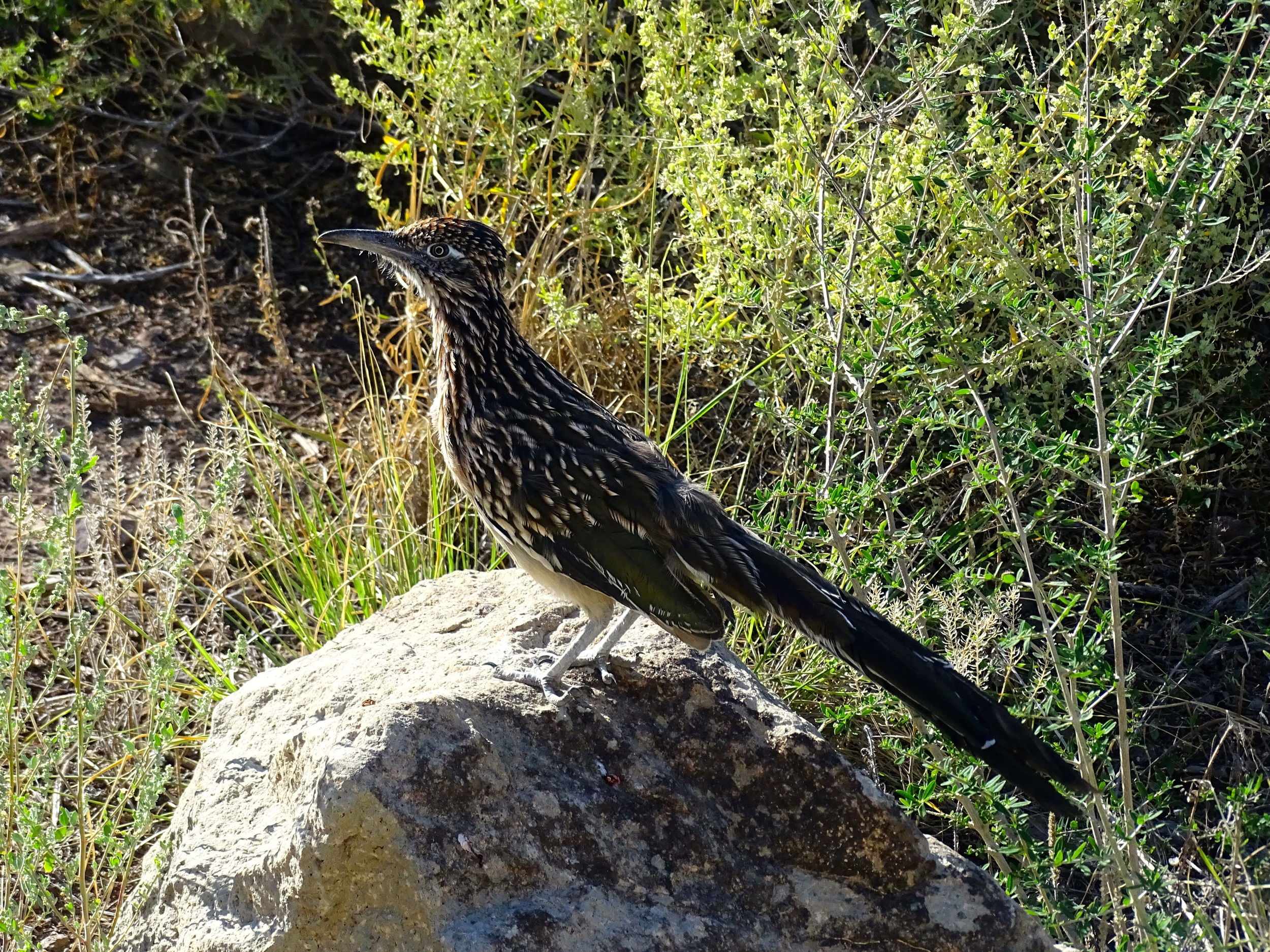 Roadrunner...now you see him...