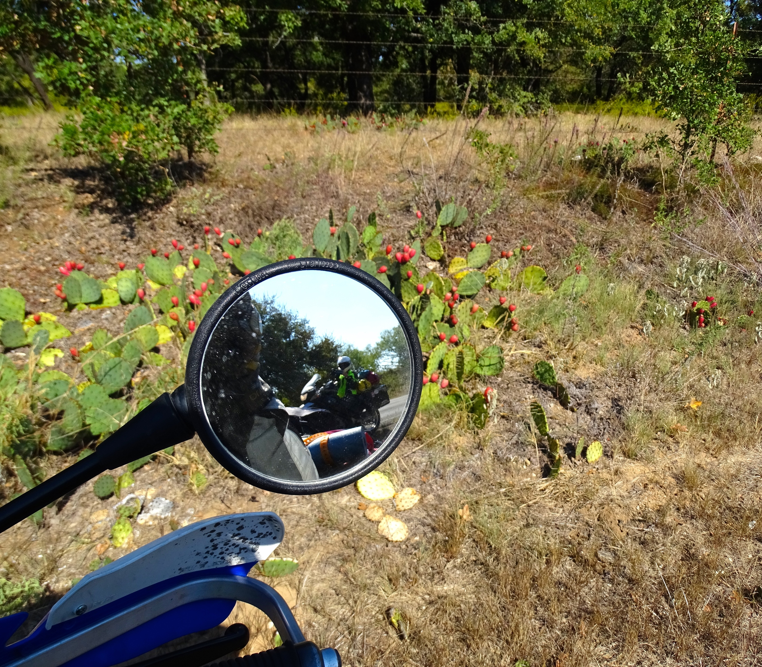 See more prickly pear harvest photos in the link at the bottom of this post.