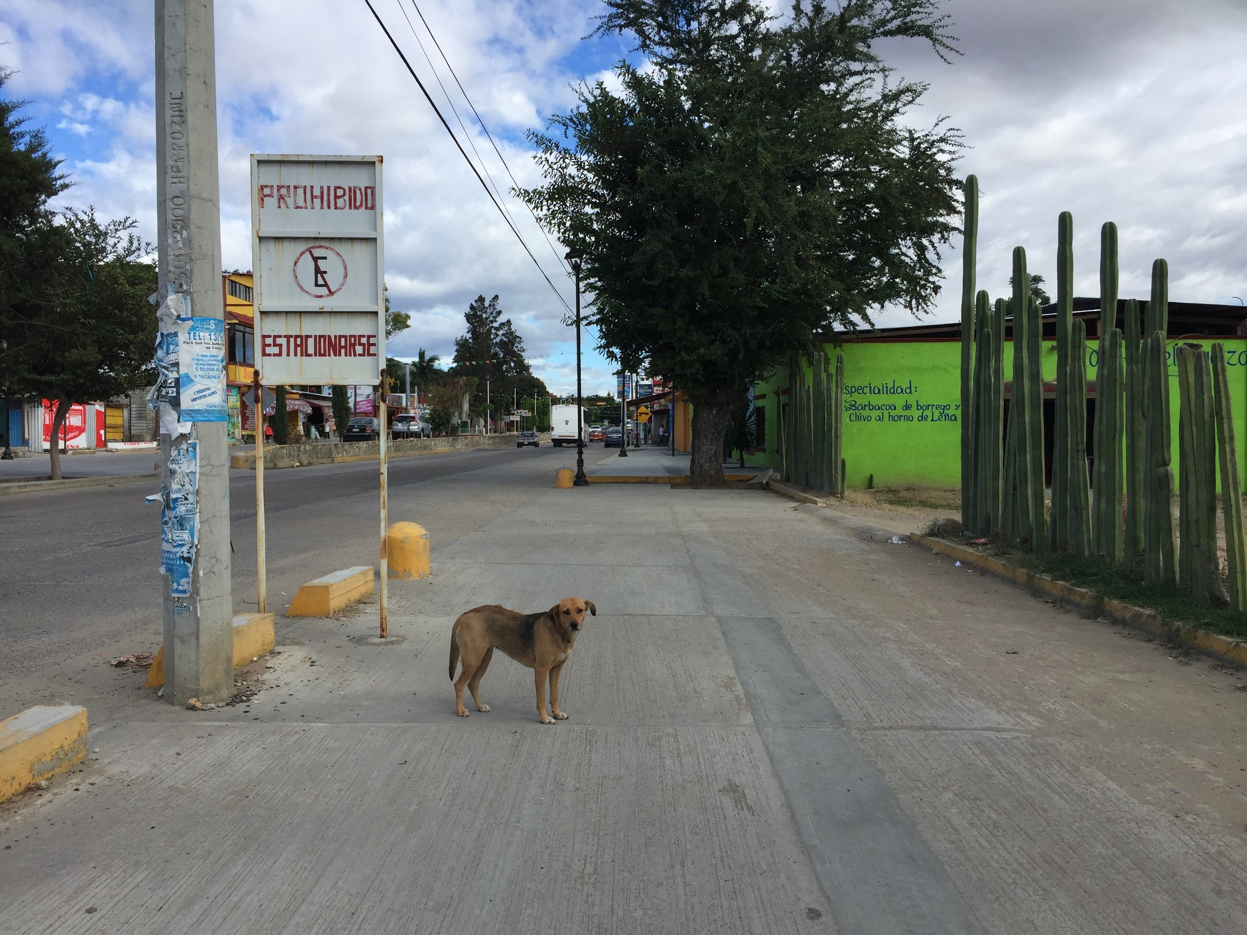 Typical street view. Lots of stray dogs.
