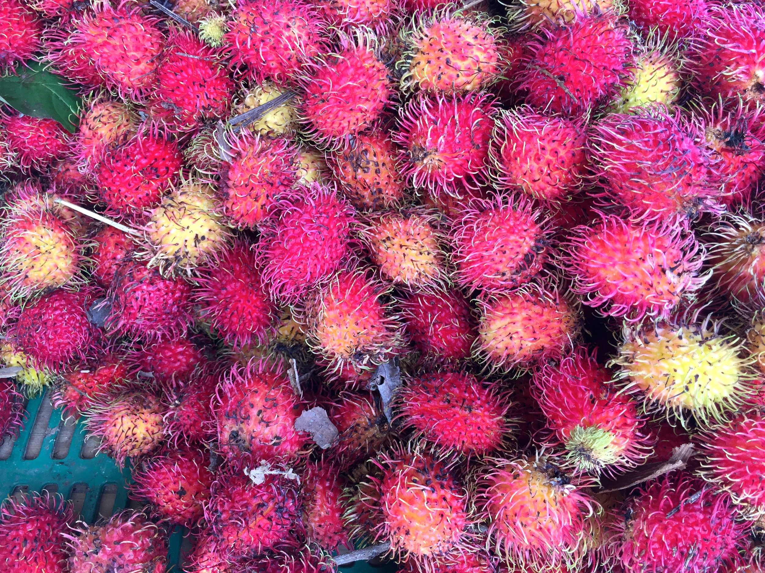 Fresh lychee fruit at a roadside fruit stand.