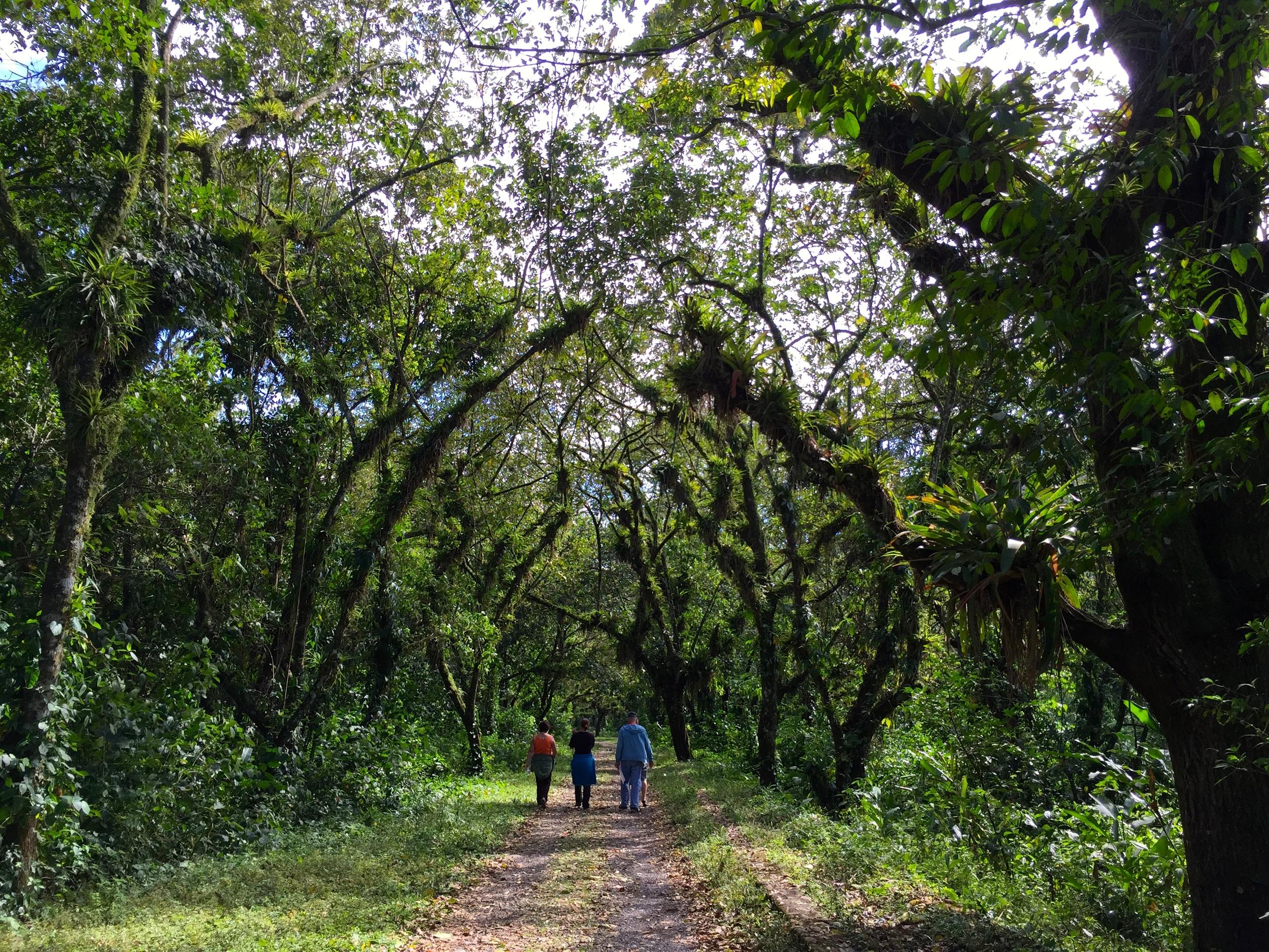 Walking to Lake Yojoa