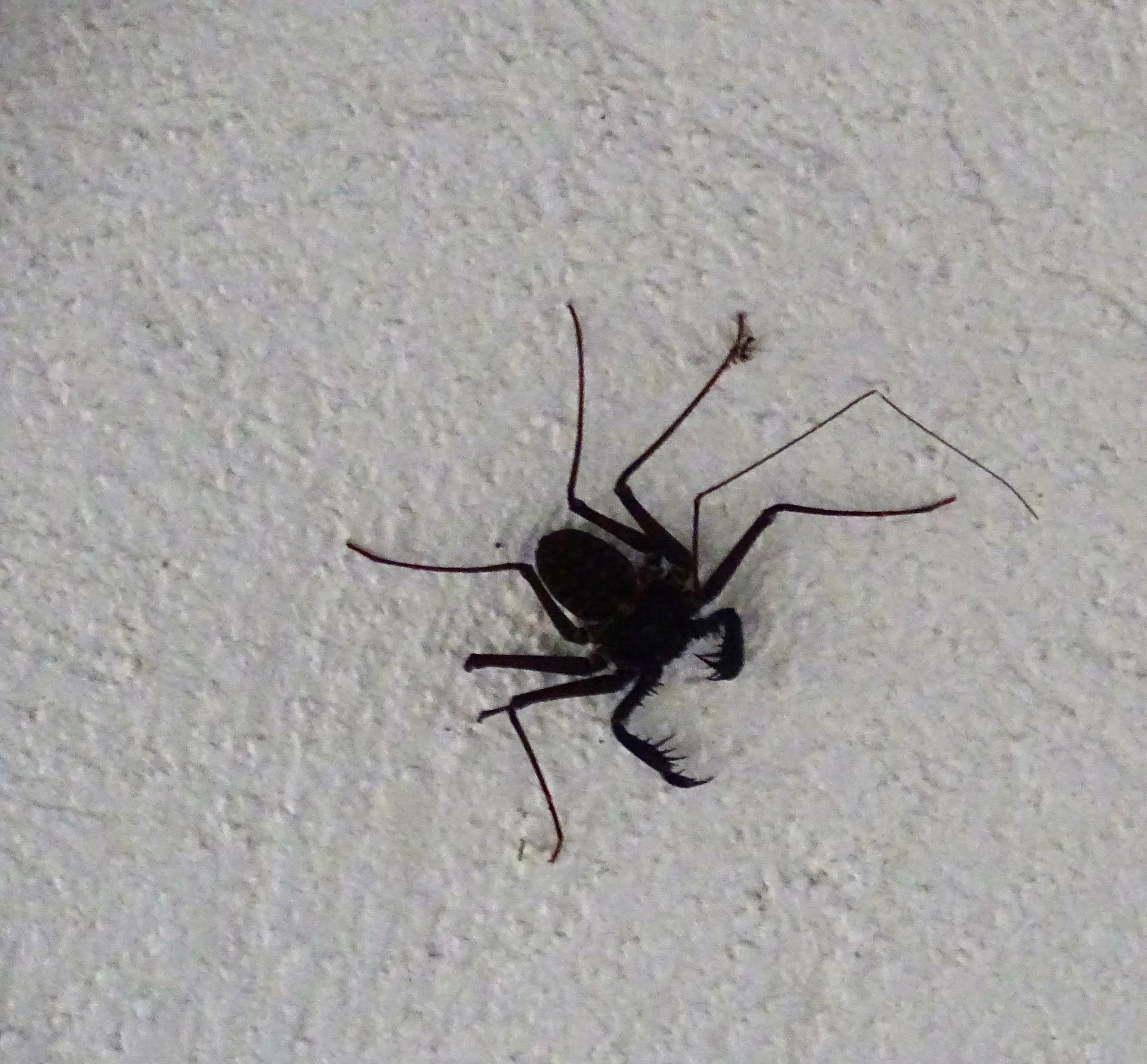Interesting spider.