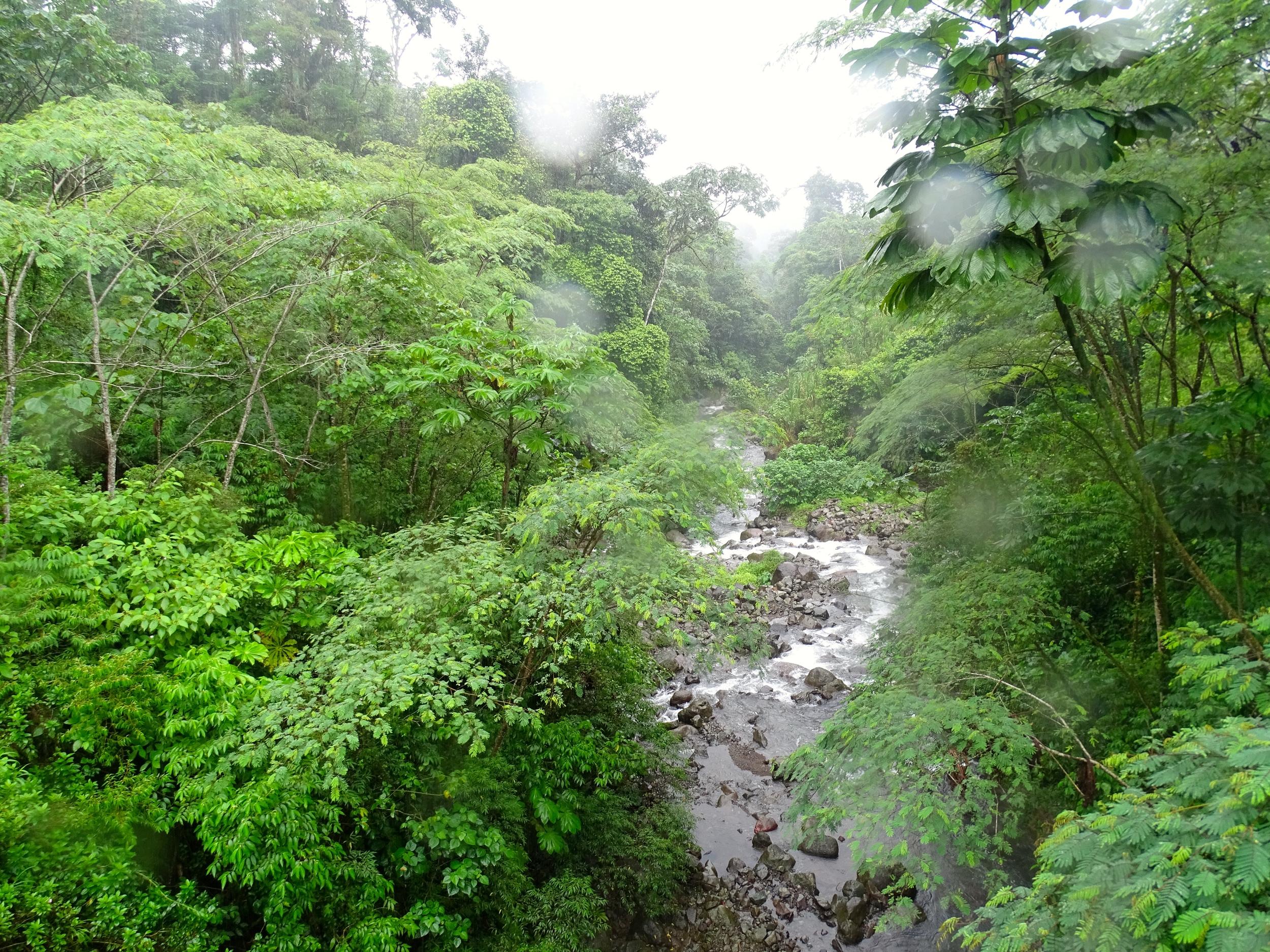 Wet side of Panama