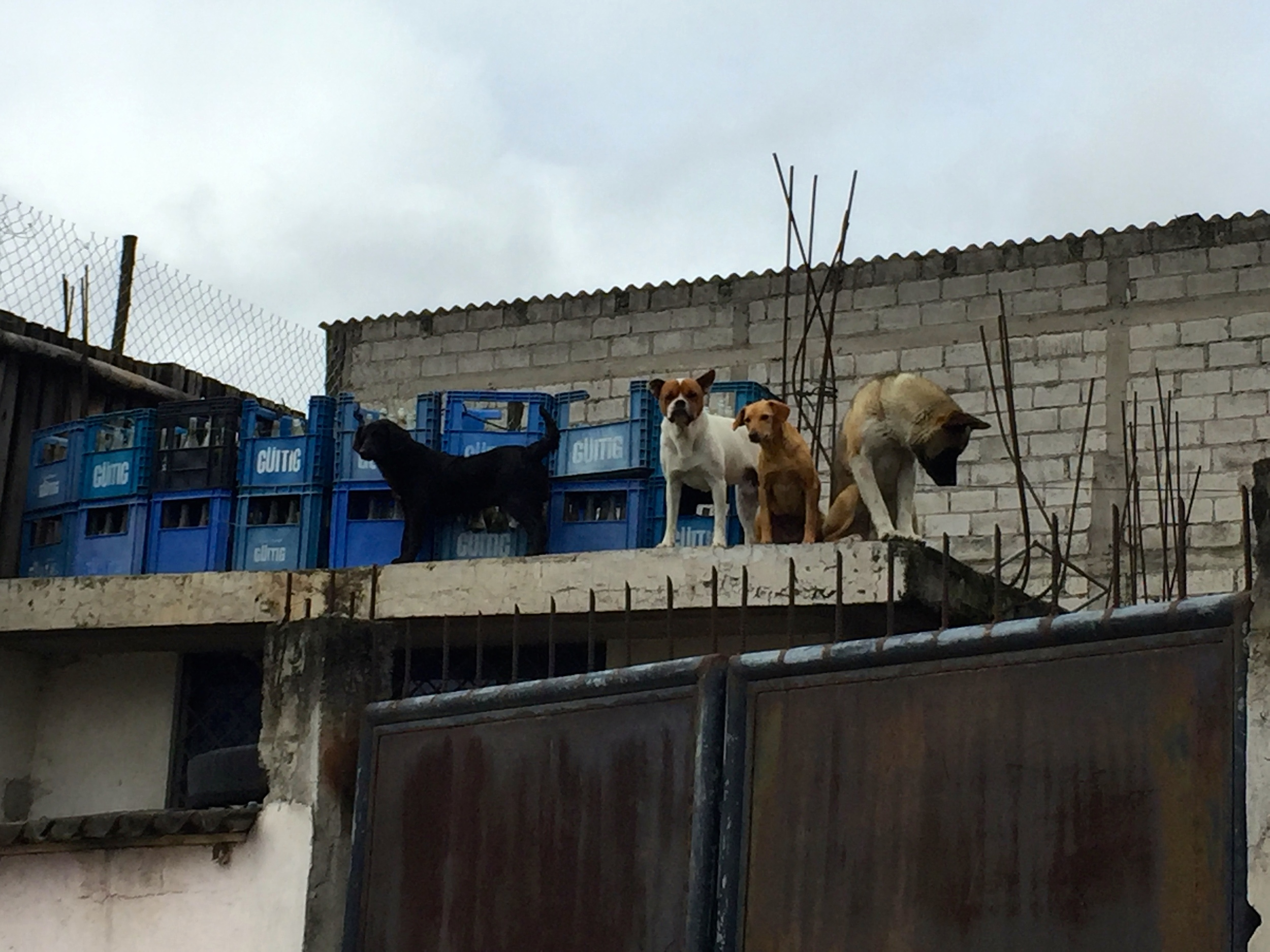 Walking between the animal section of the market and the arts area, we noticed this roof top dog kennel.