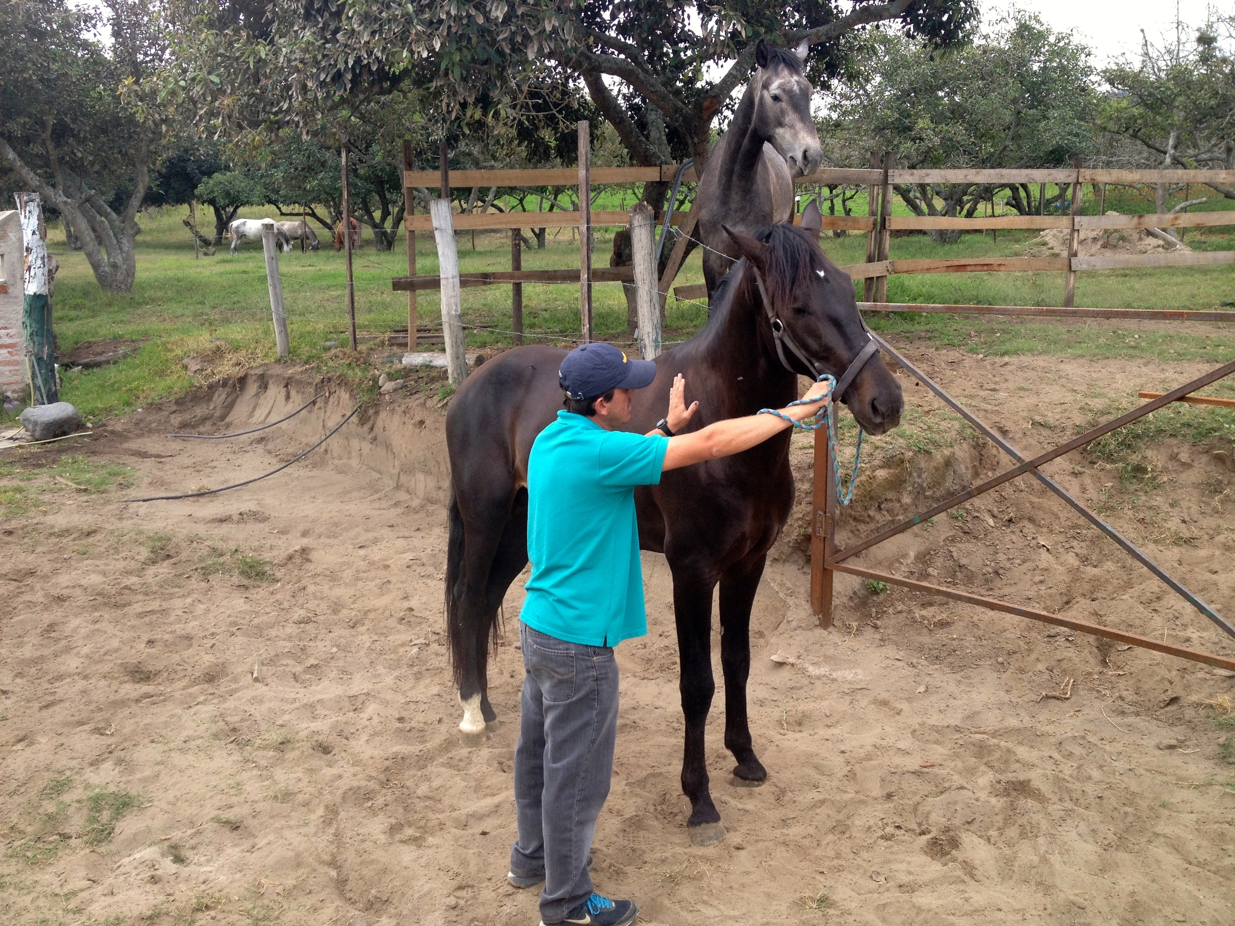 Loved our day at Mila's family's farm. This is her brother with a very spirited, huge horse.