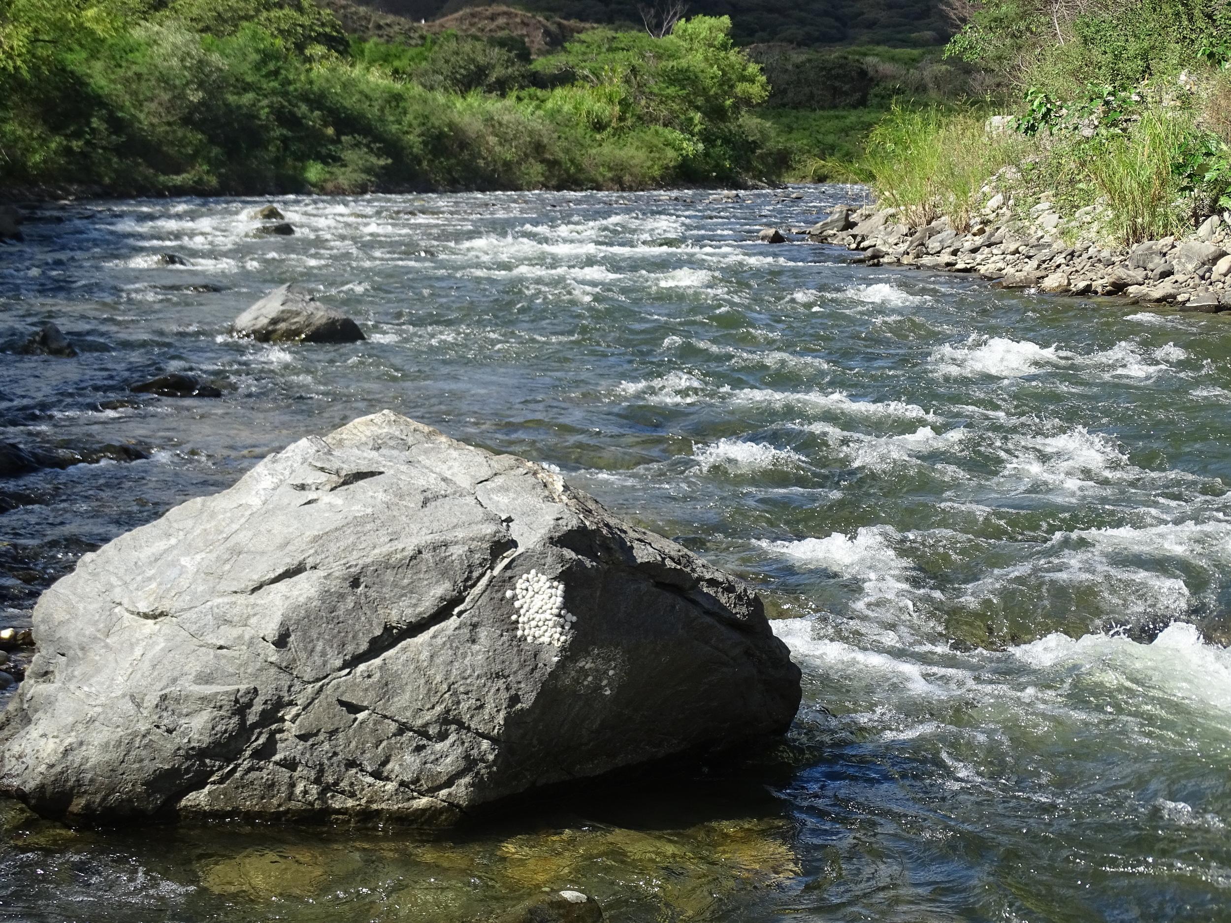This beautiful river runs near Scott's property.