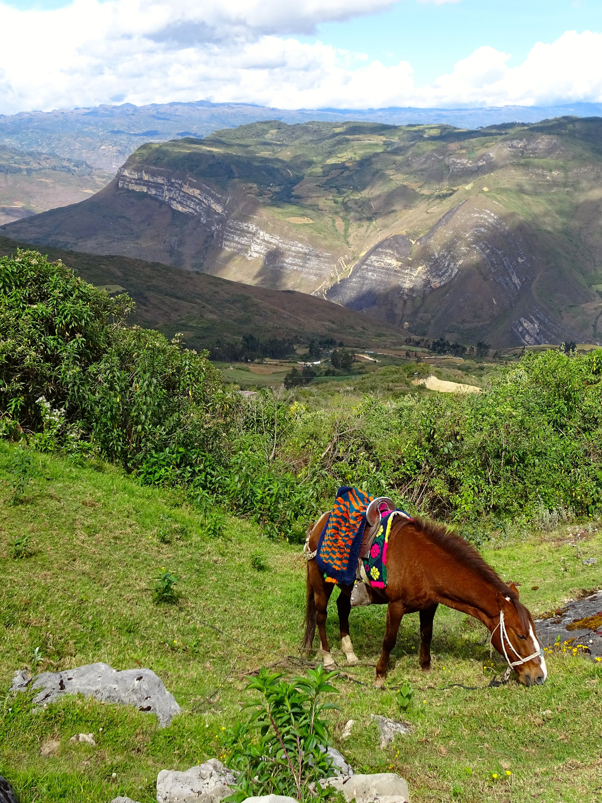 I loved the saddle and blanket on this horse.  Where was he when it was time to hike back down?