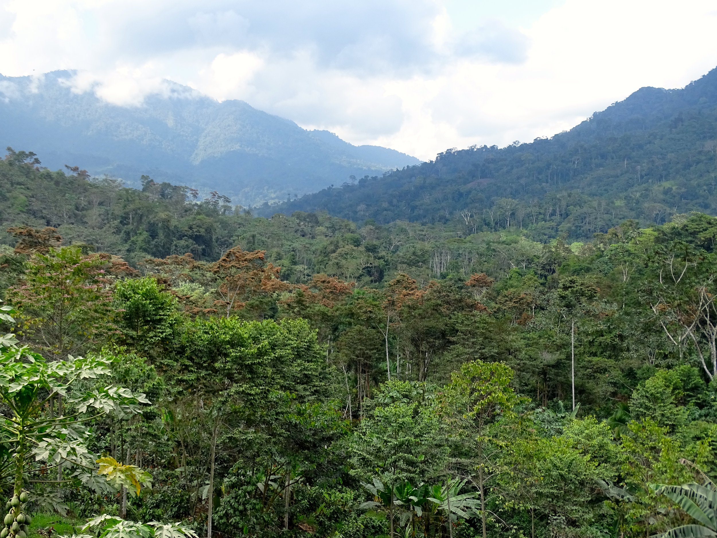 The jungle was dense and lush surrounding us.