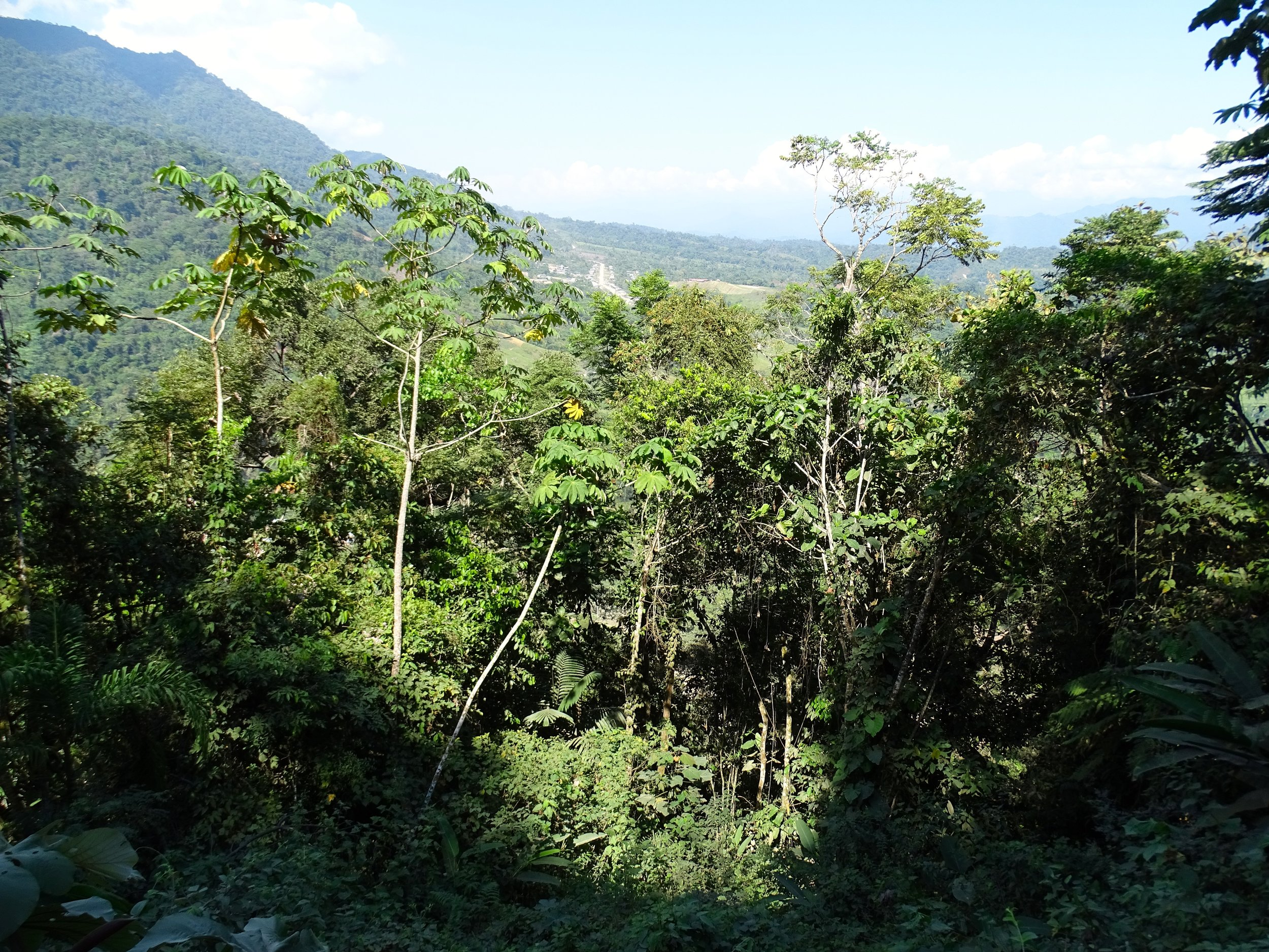 The road cuts sometimes reveal how dense and scrambled the jungle growth is.