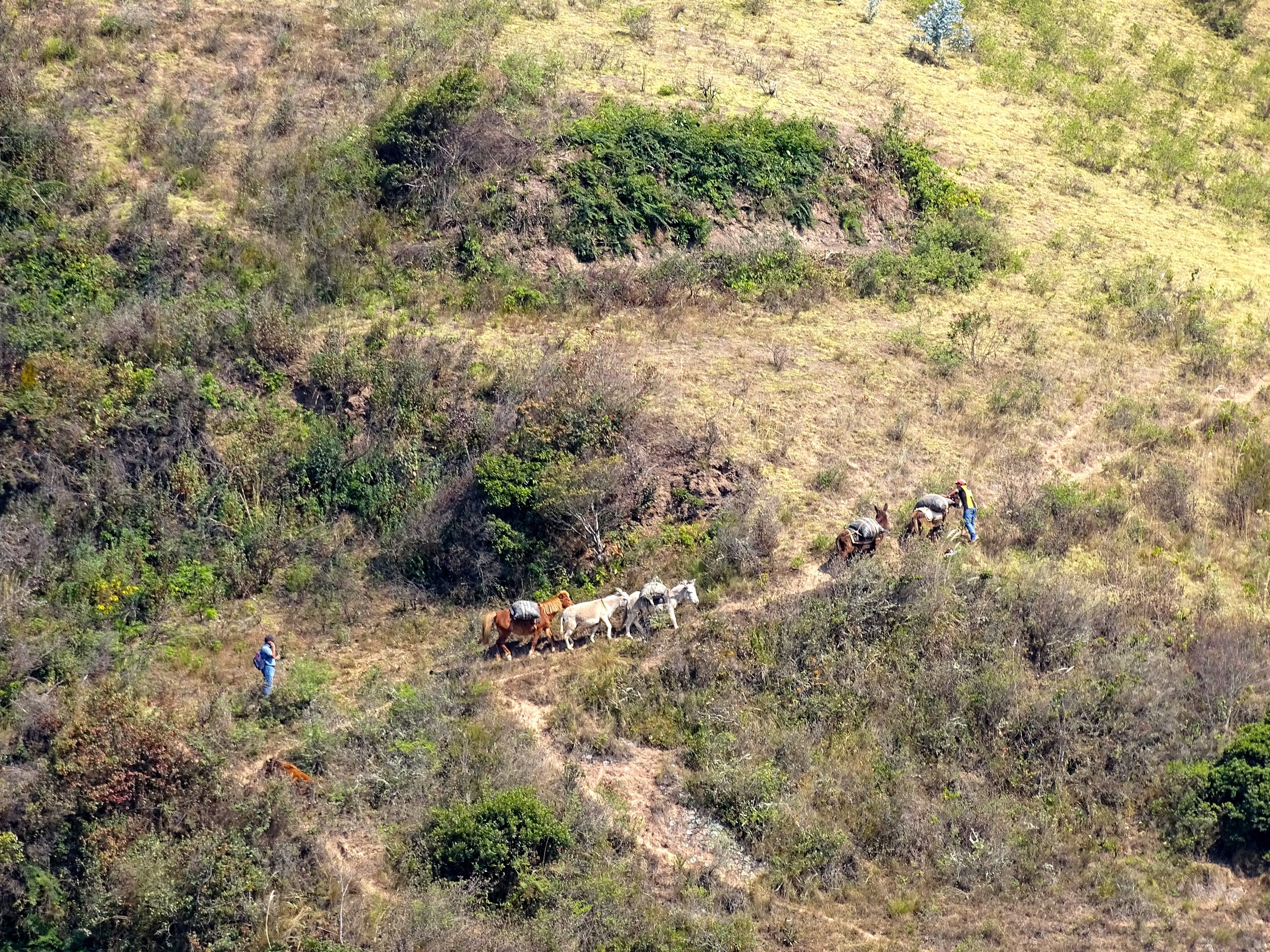 A view from the road of folks traveling with mules through the mountain trails.