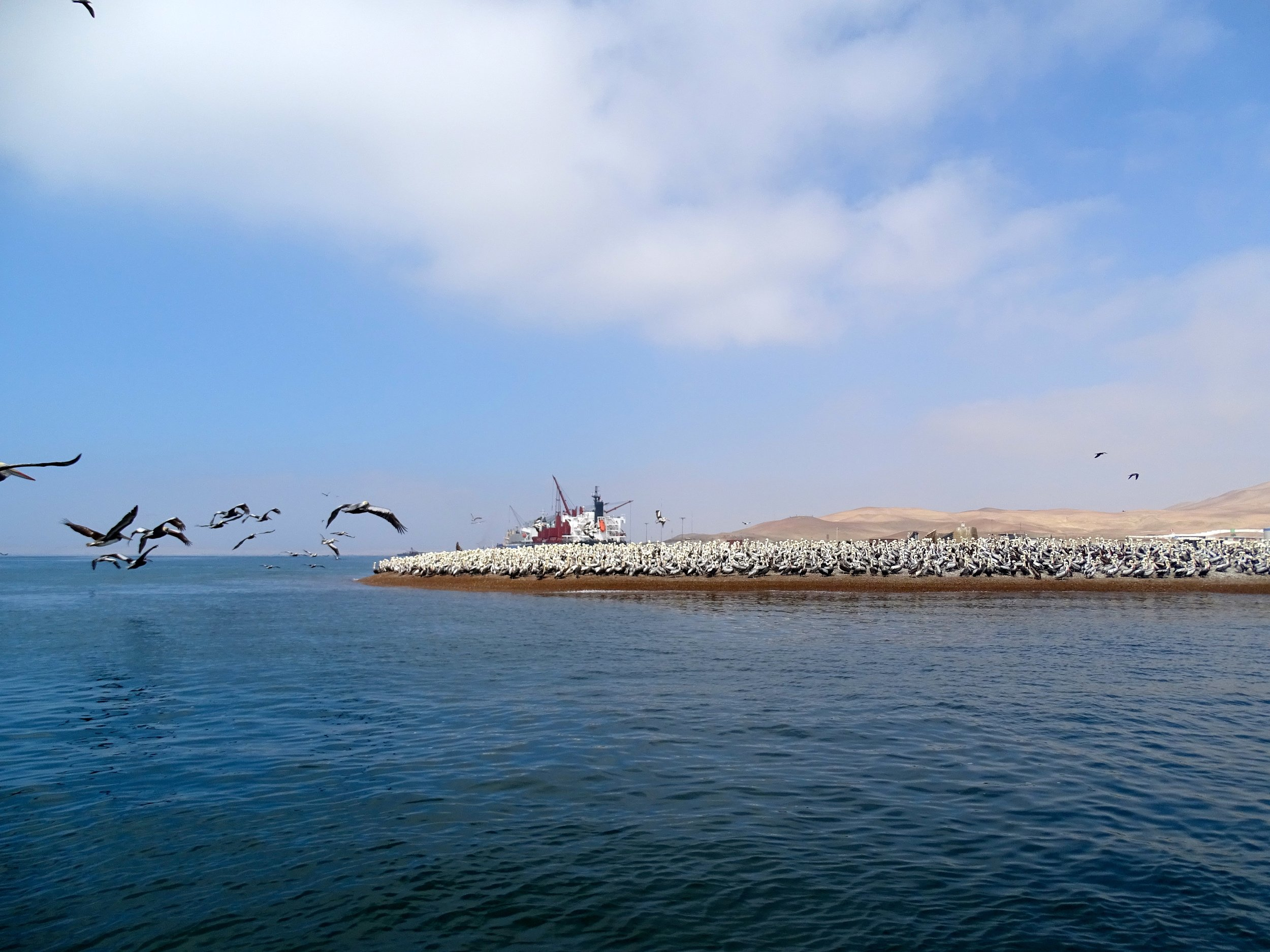 Seabirds just off Paracas, Peru