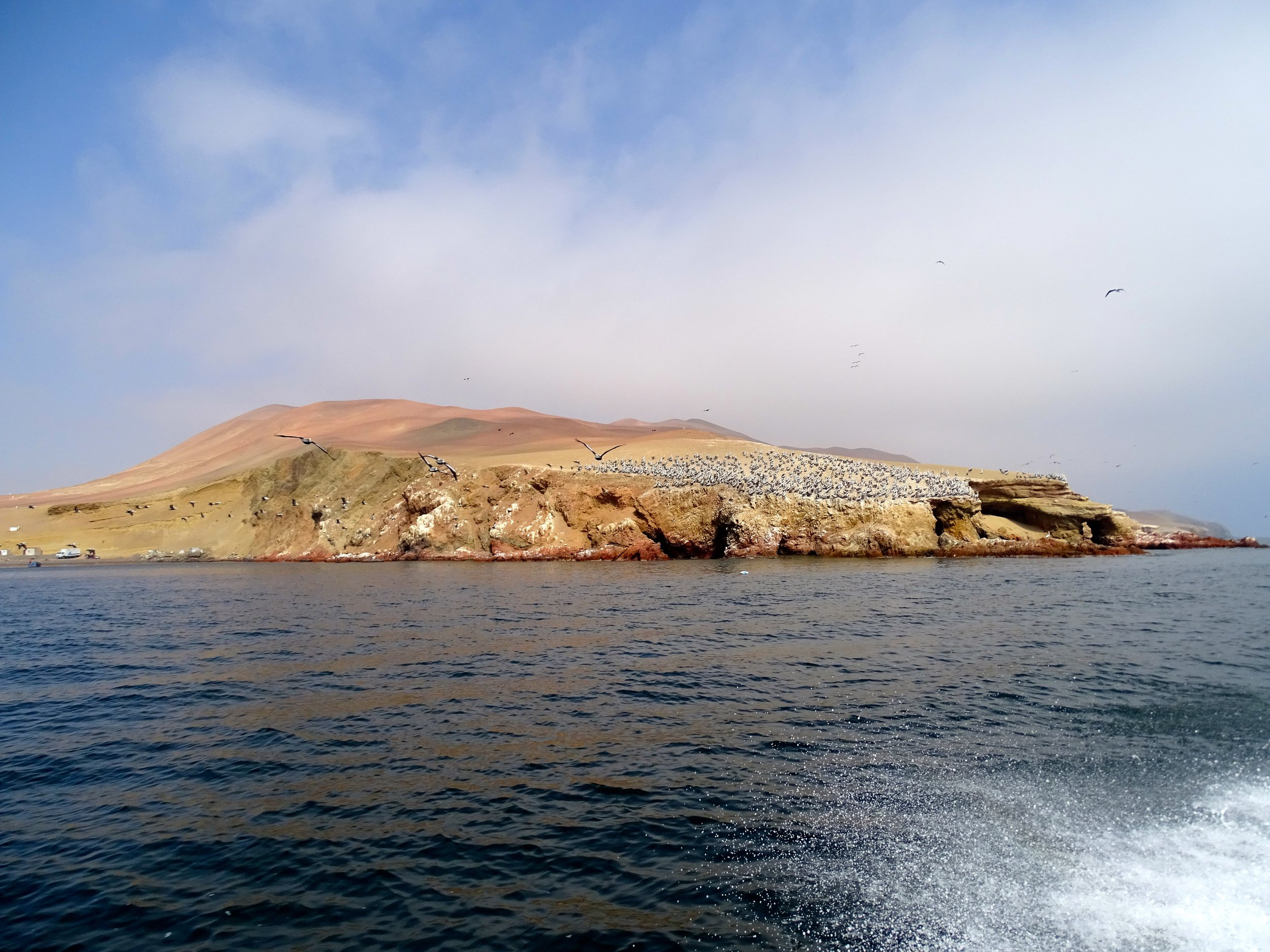 Seabird colonies off Paracas.
