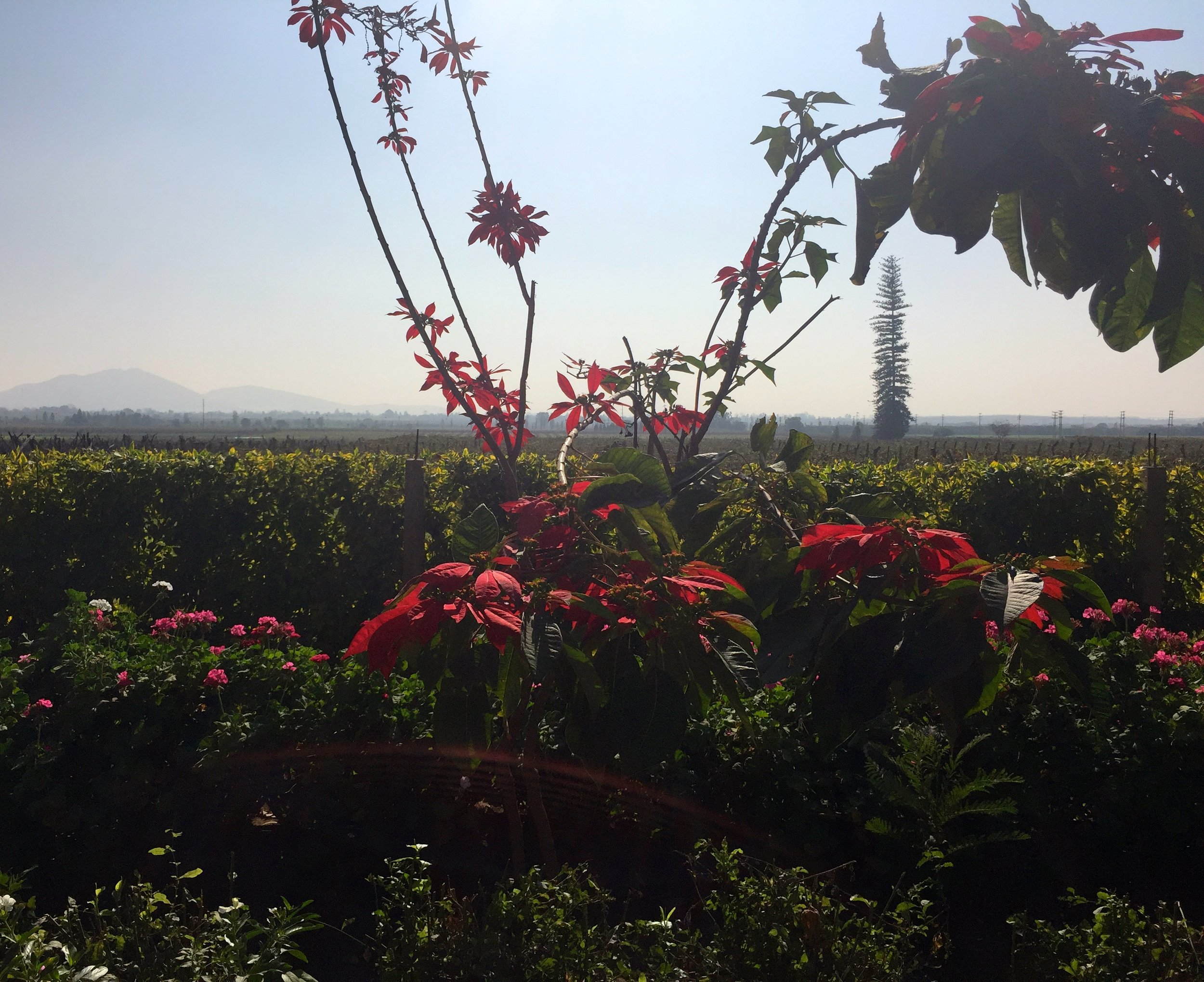 Flowers and vines, volcanoes in the distance, weird trees, too.