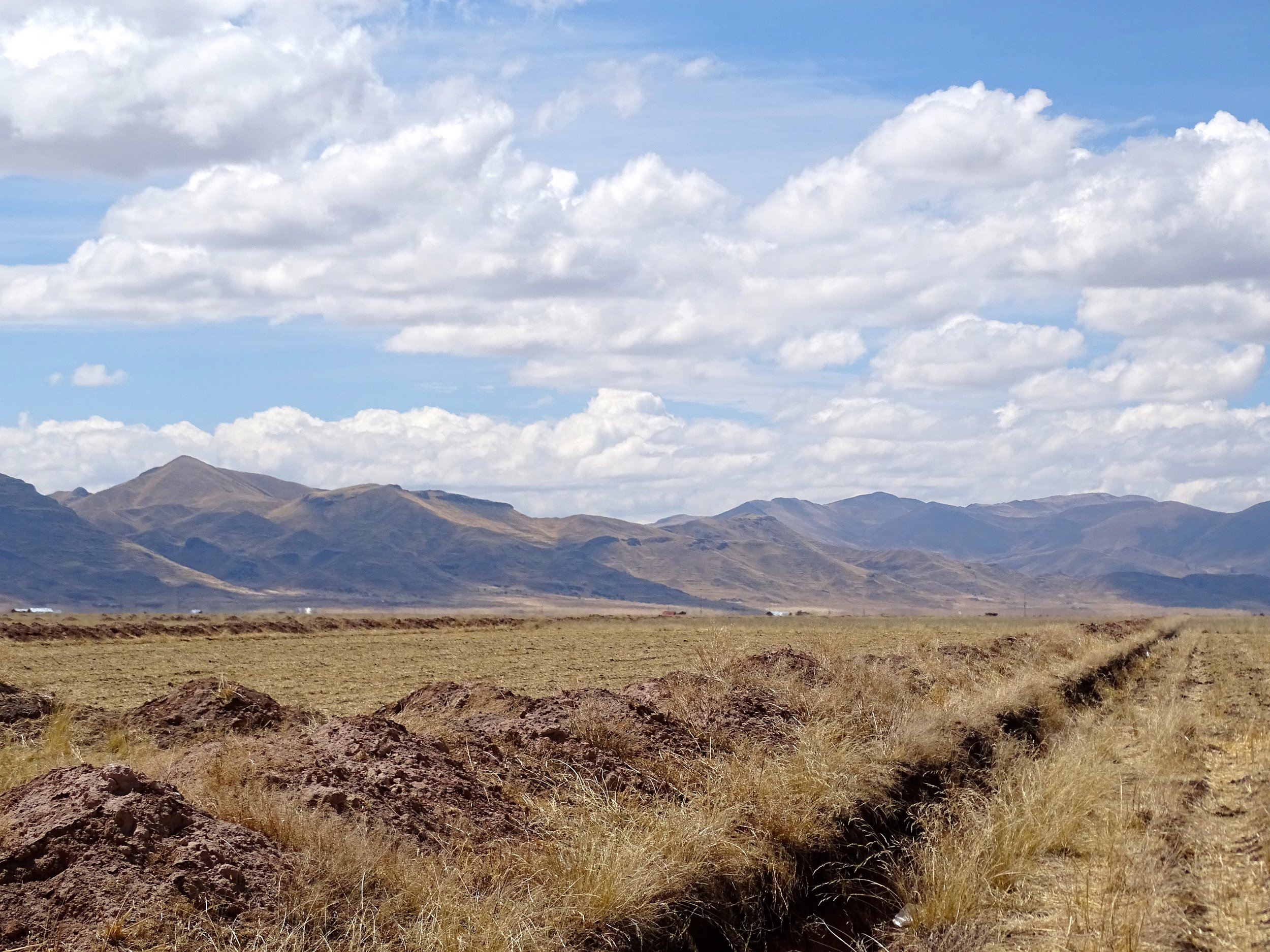 Flat, dry fields on the Altiplano, just northwest of Lago Titicaca.