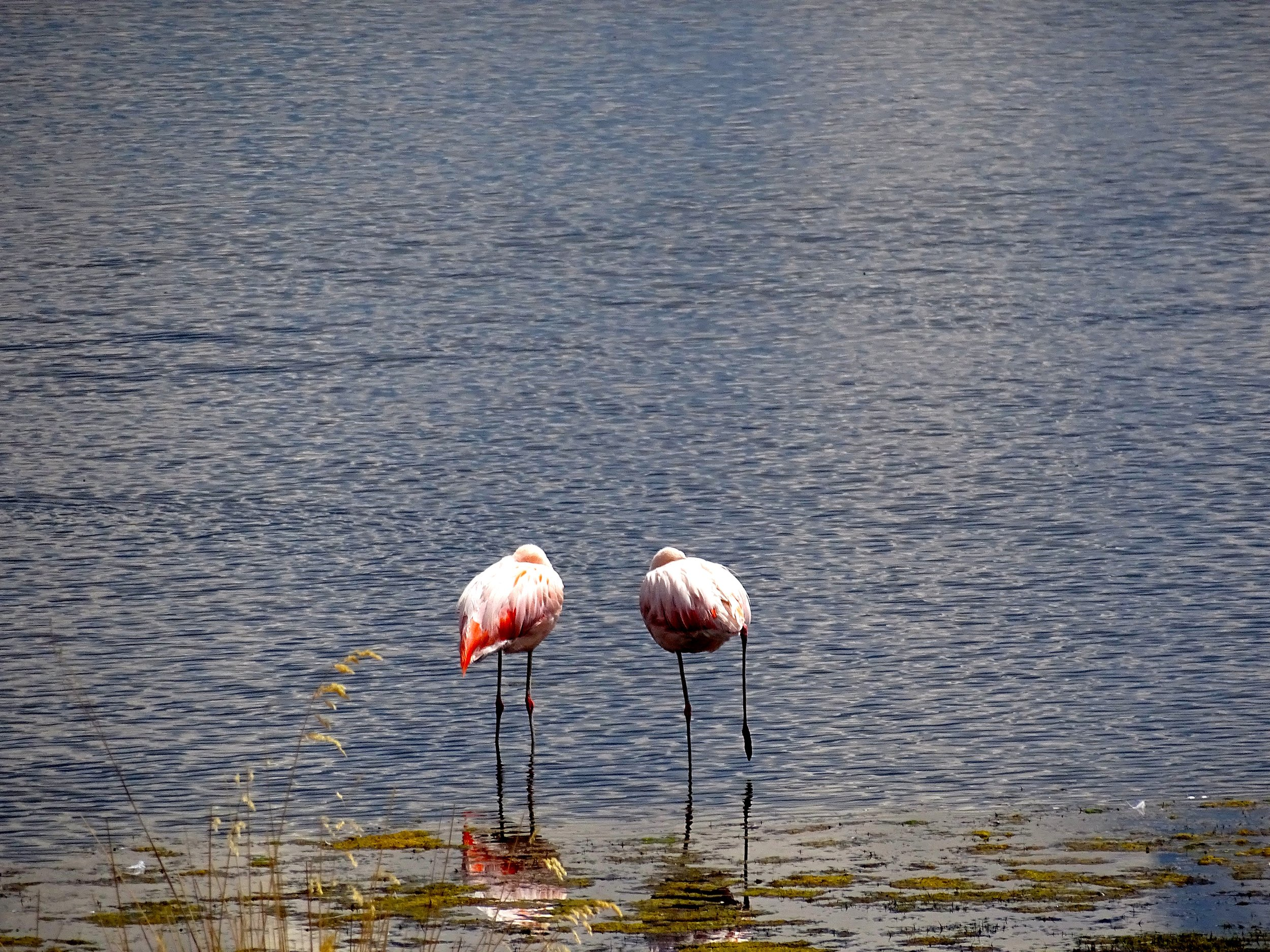 Pink flamingos at 4,000 meters and near freezing temps.  Who knew?