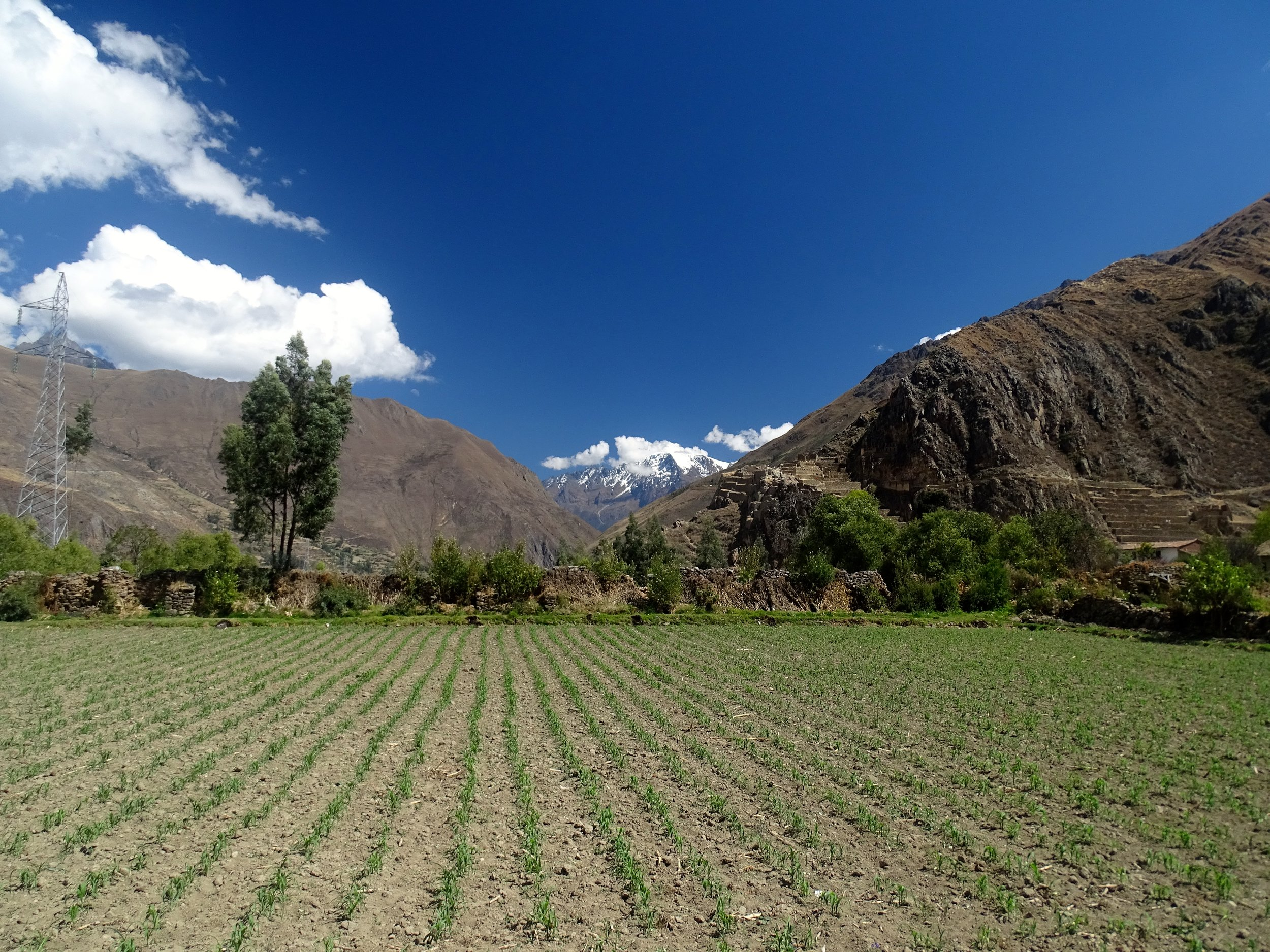 Corn fields and Incan ruins in Ollantaytambo.