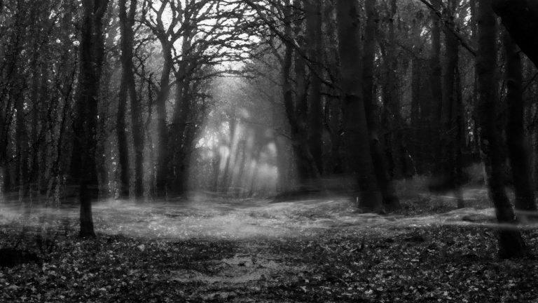 Zombie-Cat-Woods-768x432.jpg