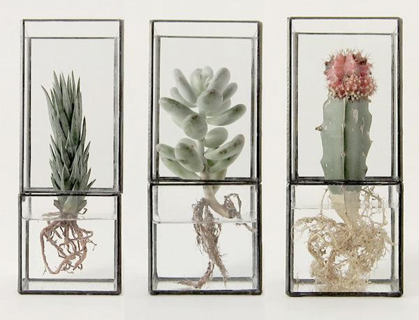 Hydro  Vaso vetro e ferro   1012Terra   Spazio Materiae   Pianta grassa, succulenta, cactus, radici   Napoli
