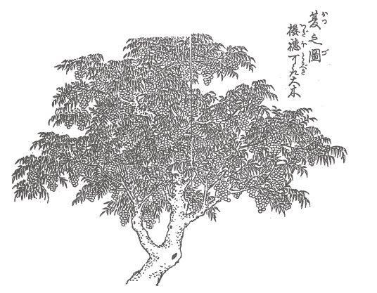 Candele lavorate a mano in Giappone   Daiyo   Spazio Materiae,  Napoli   Sumac, Haze tree   Cera naturale