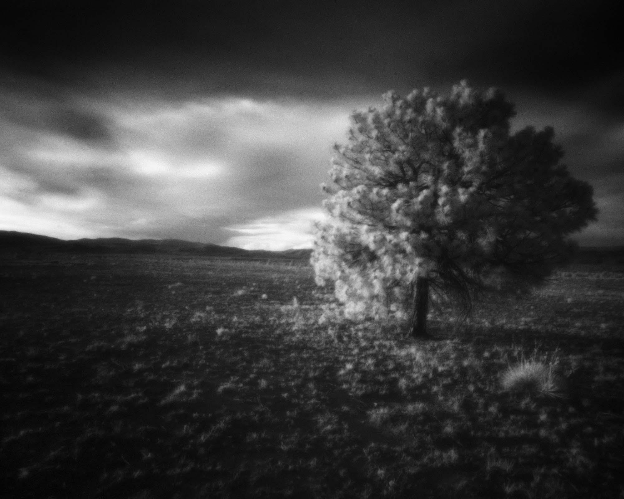 Pecos Tree