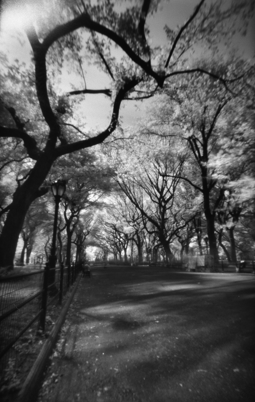 The Mall- Central Park