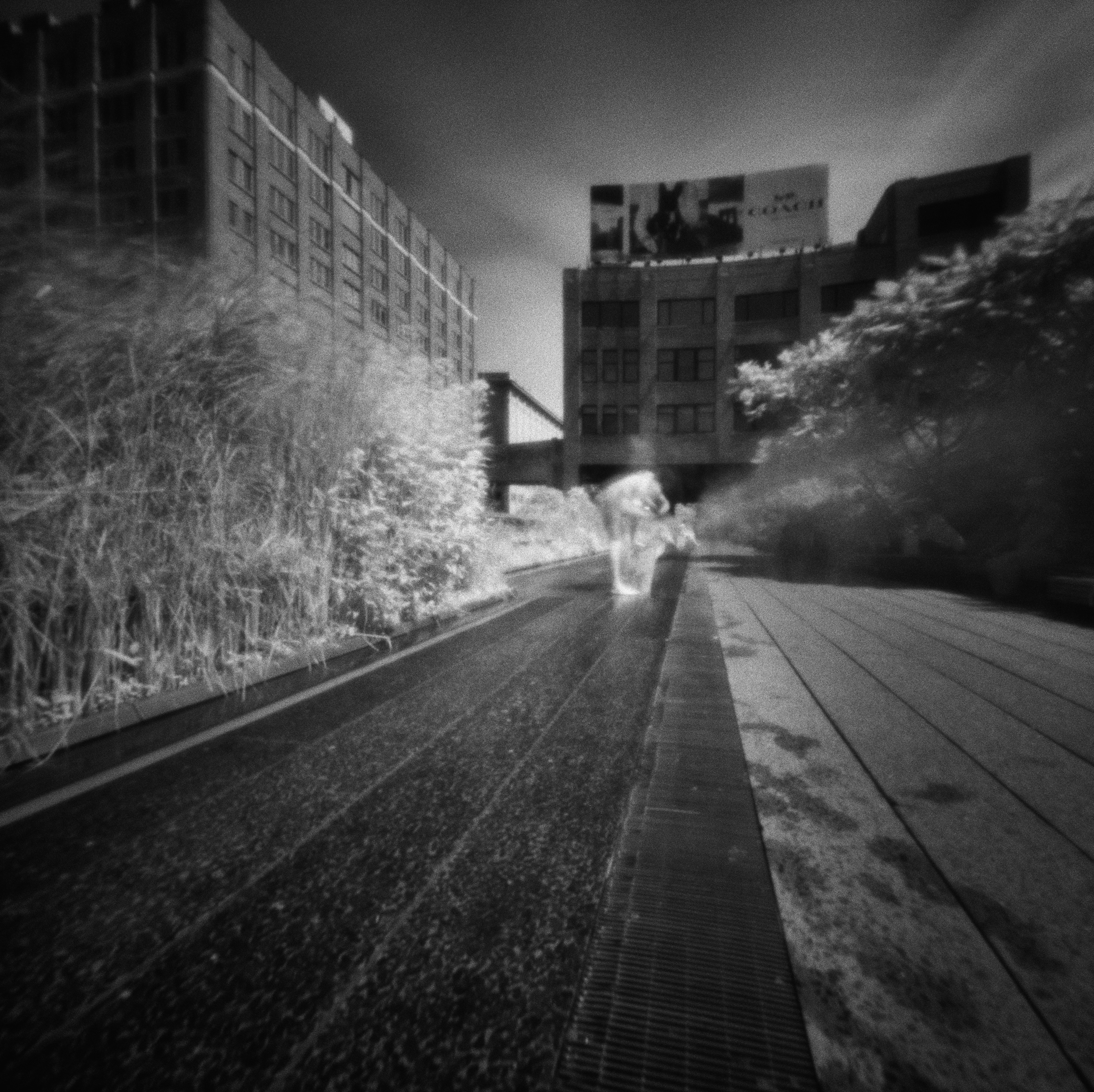 The High Line #13