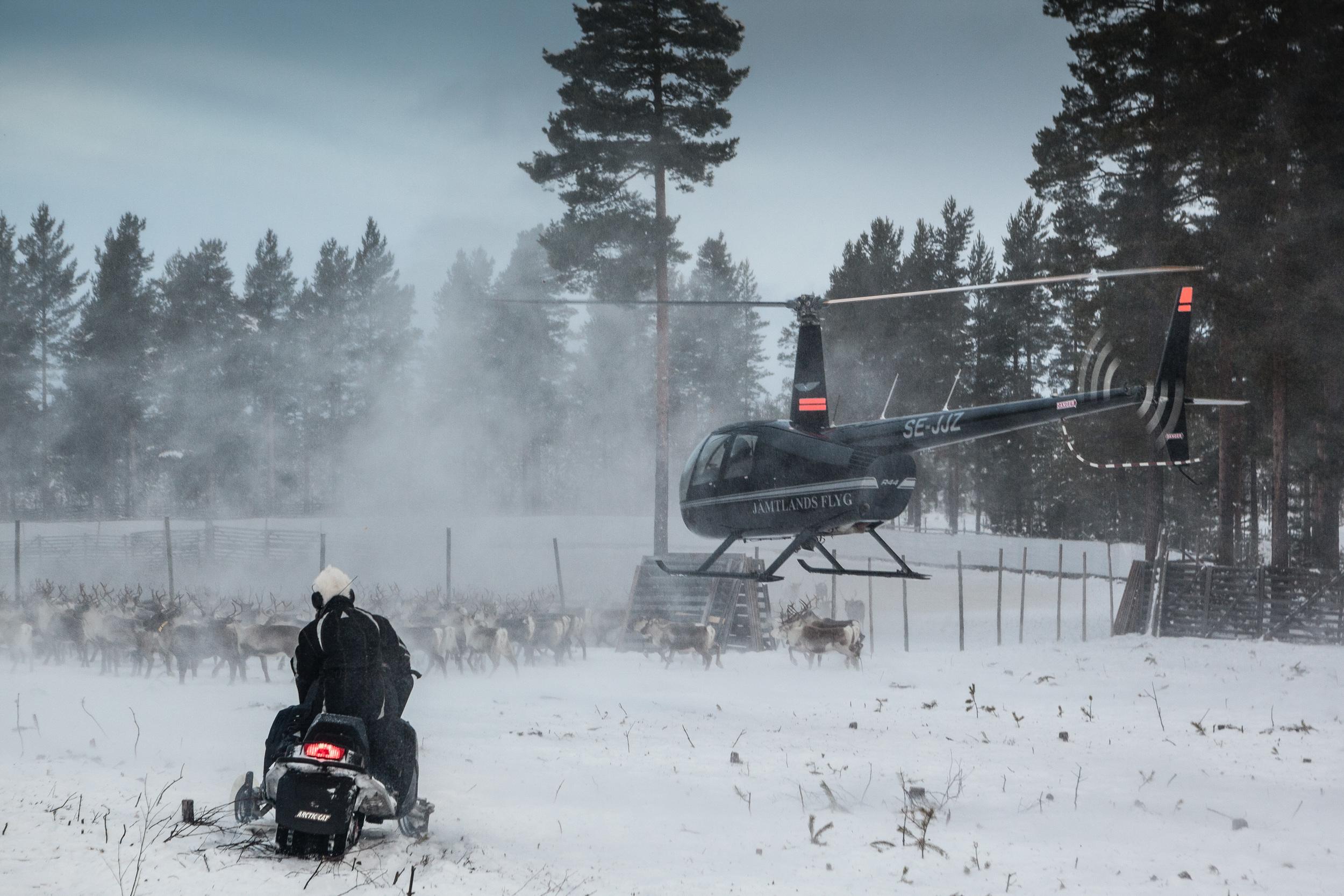Reindeer_002.jpg