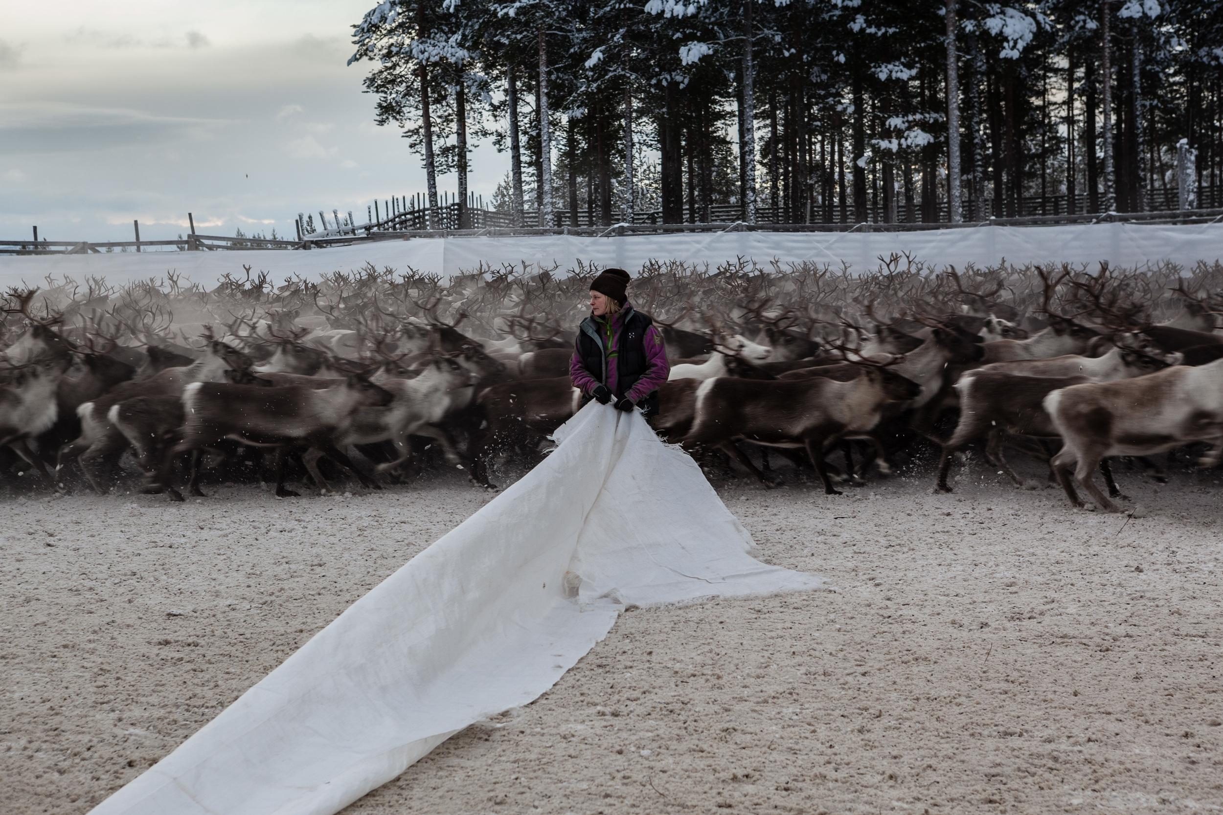 Reindeer_006.jpg