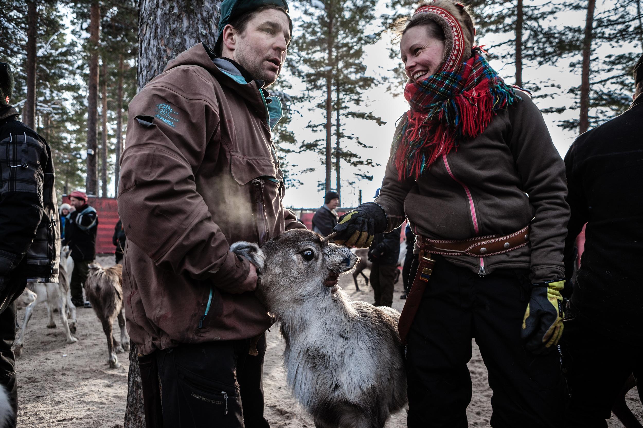 Reindeer_011.jpg
