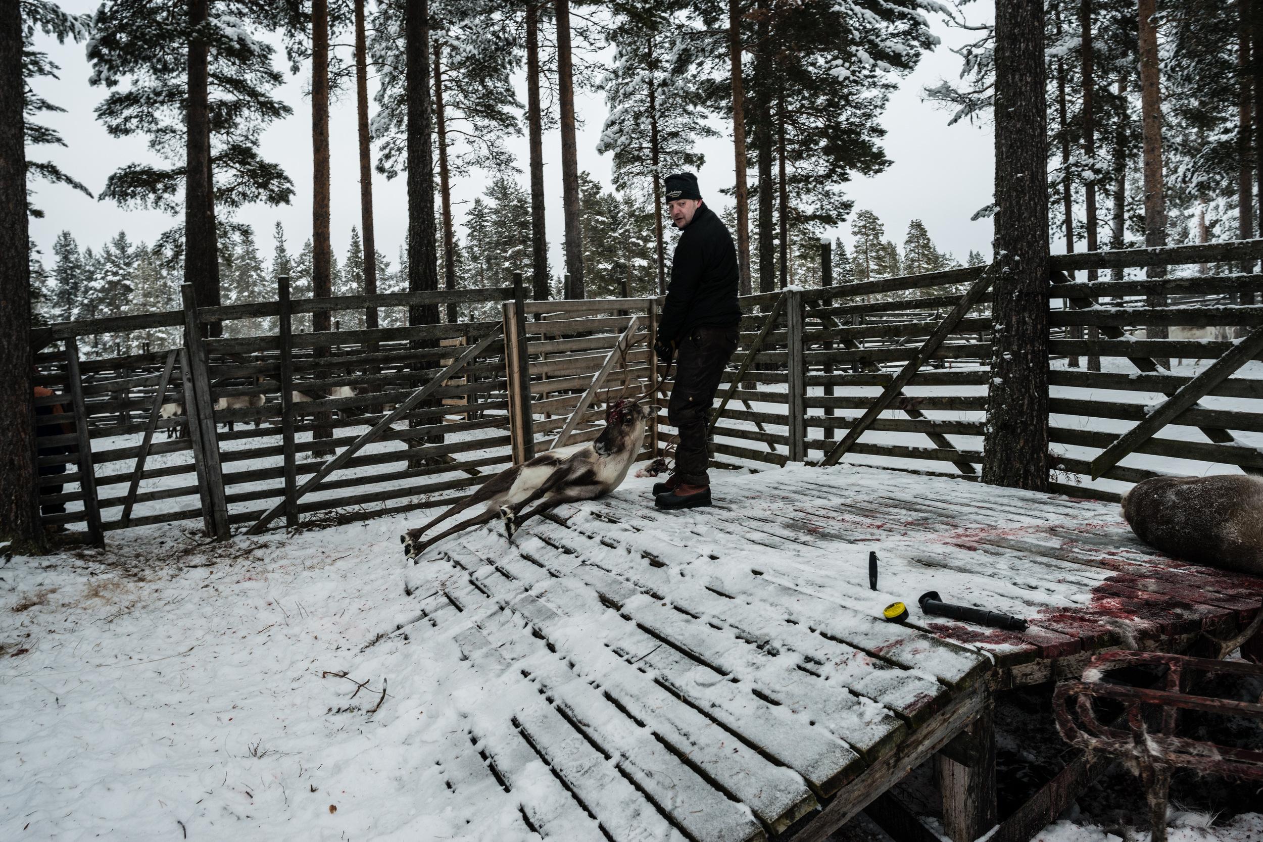 Reindeer_014.jpg