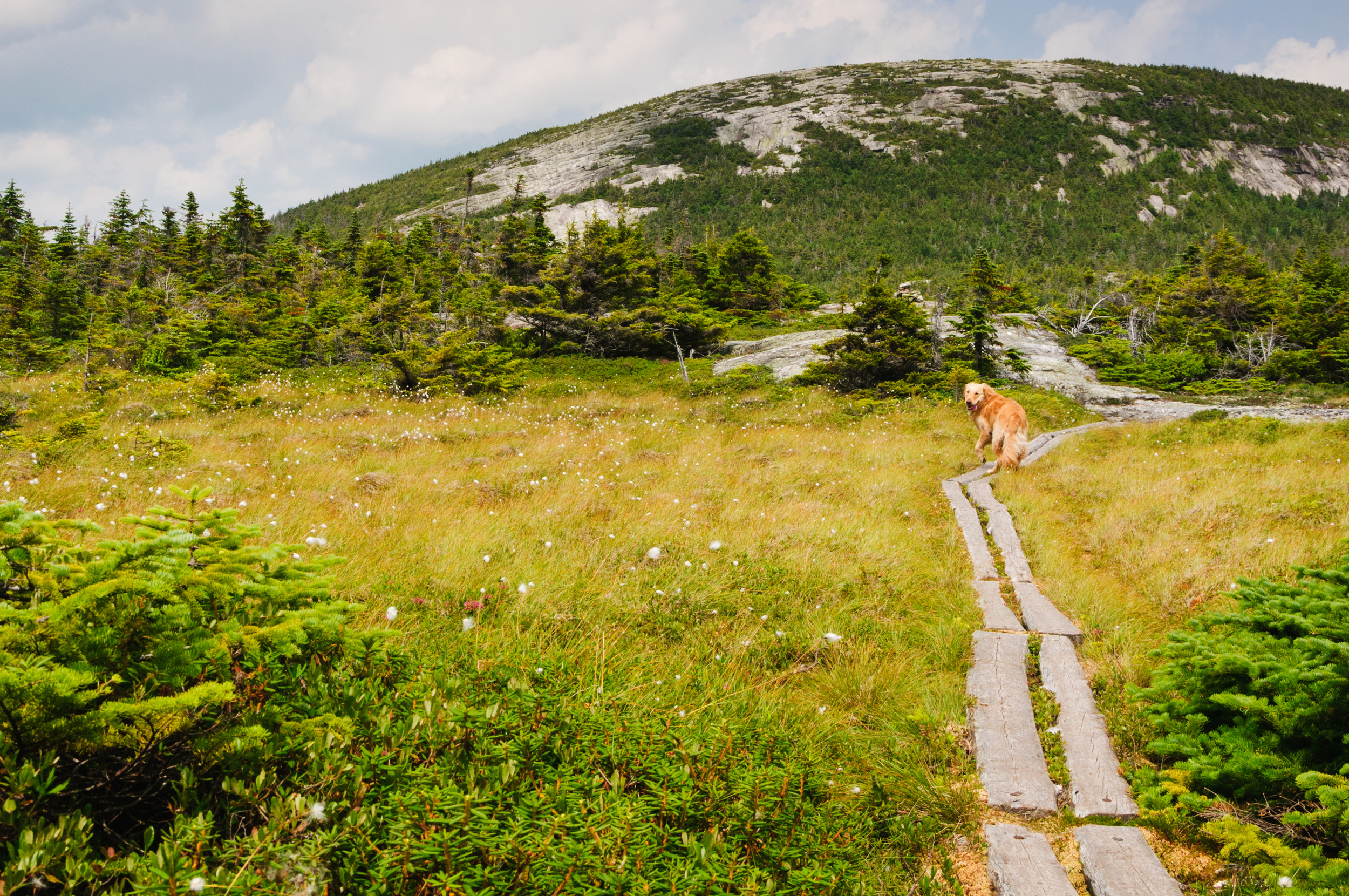 Hiking along the a section of the Appalachian Trail in Maine, USA.